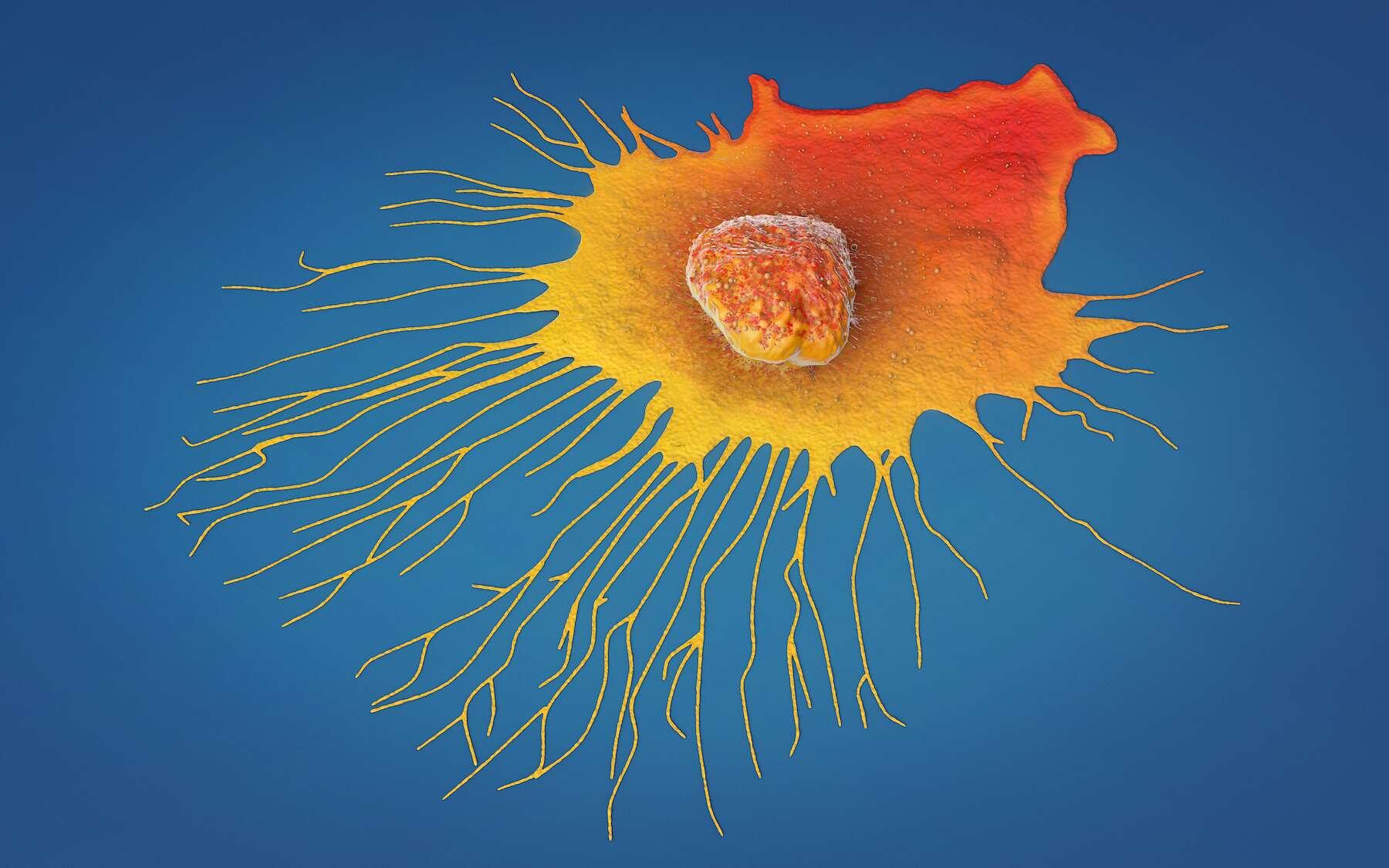 Les cancers les plus fréquents et les plus mortels en France. © Christoph Burgstedt, Adobe Stock