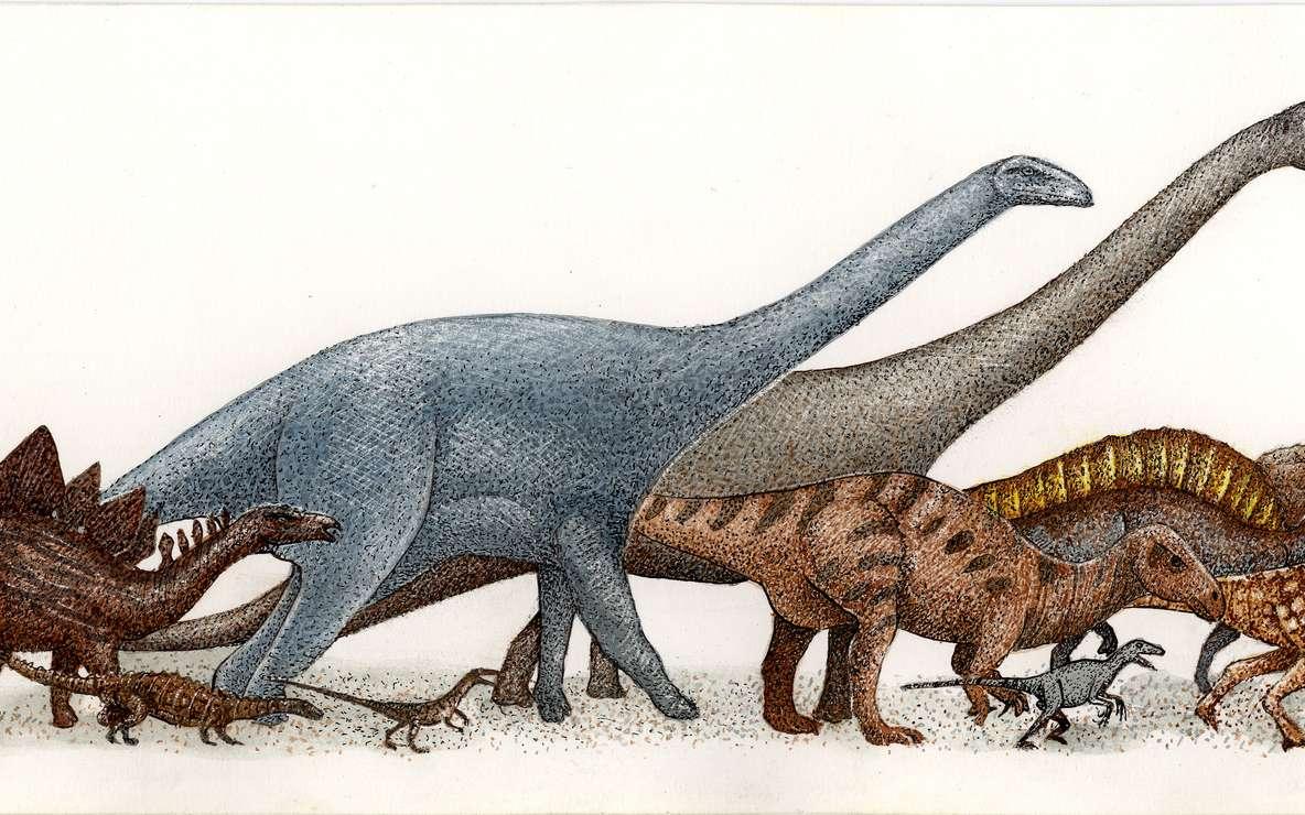 Parmi les dinosaures, beaucoup étaient petits mais certaines espèces ont atteint de très grandes tailles. Curieusement, les titanosaures de l'actuelle Patagonie étaient même géants, avec des longueurs dépassant les trente mètres. © Pixaterra, Fotolia