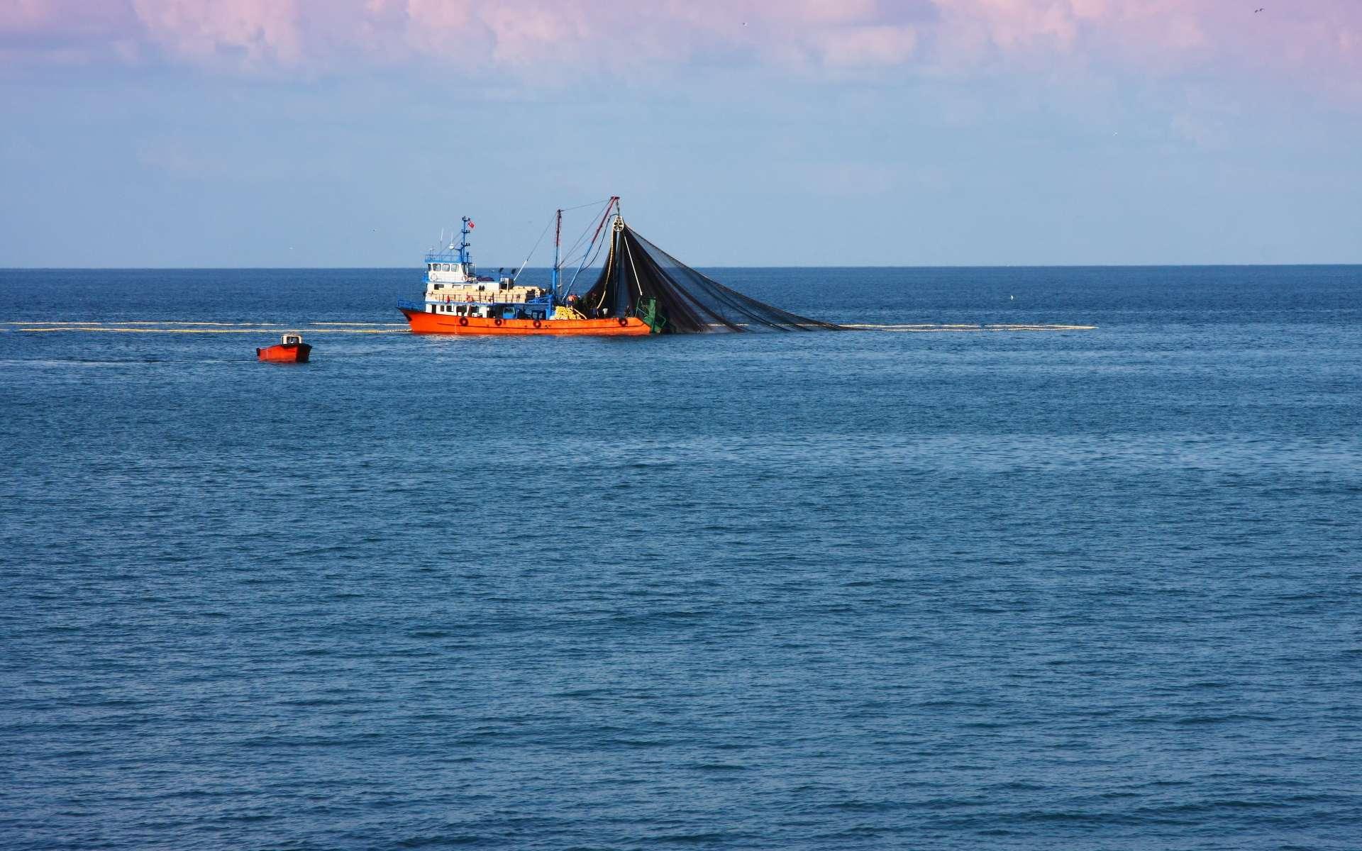 Le chalutage consiste, comme ici en mer Noire, à descendre un large filet au niveau du fond, maintenu ouvert par deux panneaux latéraux et par un lestage de la « lèvre » inférieure de l'ouverture tandis que le navire le tracte. Pratiquée à grande profondeur, cette pêche, marginale, puise dans des stocks mal connus et peut aussi détruire des récifs coralliens, assez fréquents à ces profondeurs. © Yavuz Sariyildiz, Shutterstock