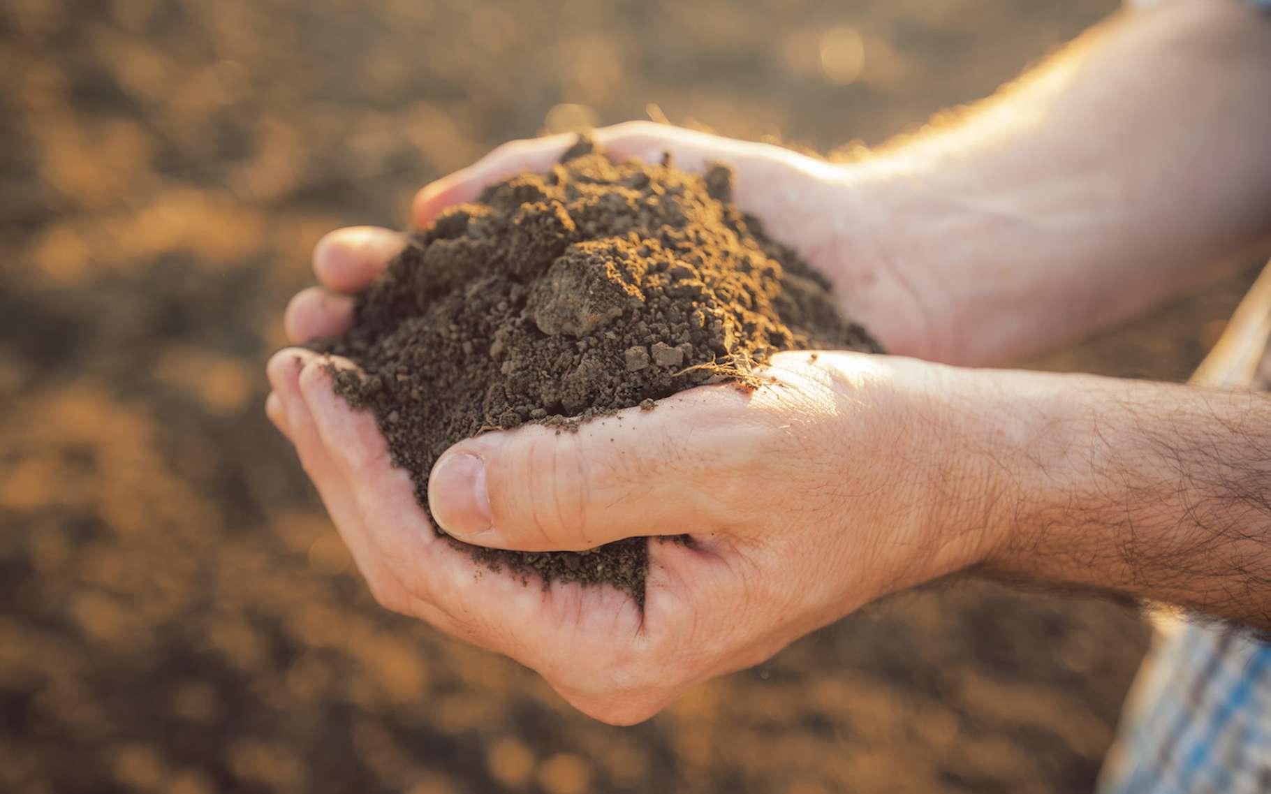 Des scientifiques ont analysé des milliers d'échantillons de terre afin d'en apprendre un peu plus sur les microbiomes des sols. © Bits and Splits, Fotolia