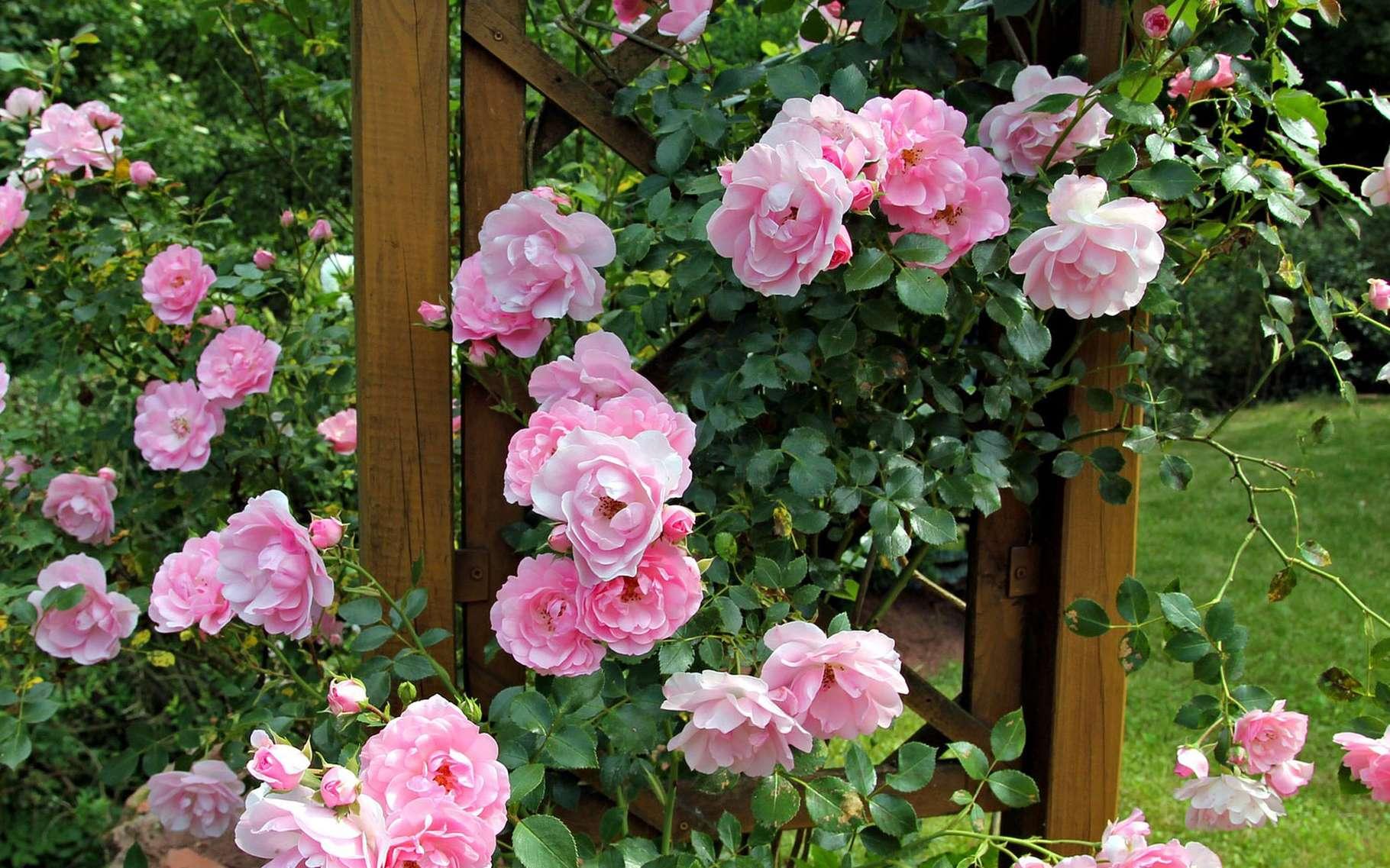 Plantes Pour Talus Sec bien choisir les plantes de son jardin : fleurs vivaces