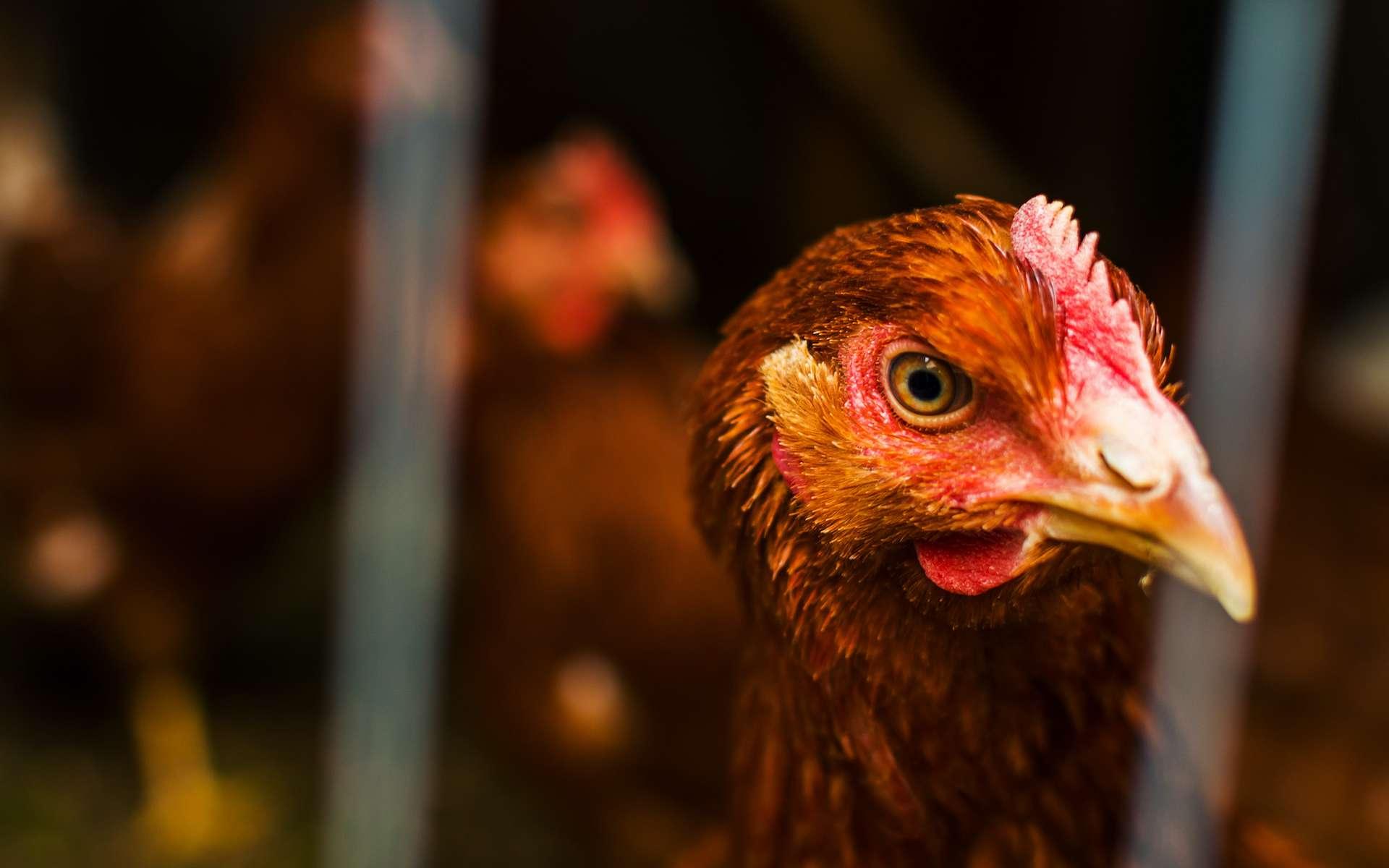 Les zoonoses sont présentes chez un animal réservoir et se transmettent occasionnellement à l'Homme. © Mariia Nazarova, Adobe Stock