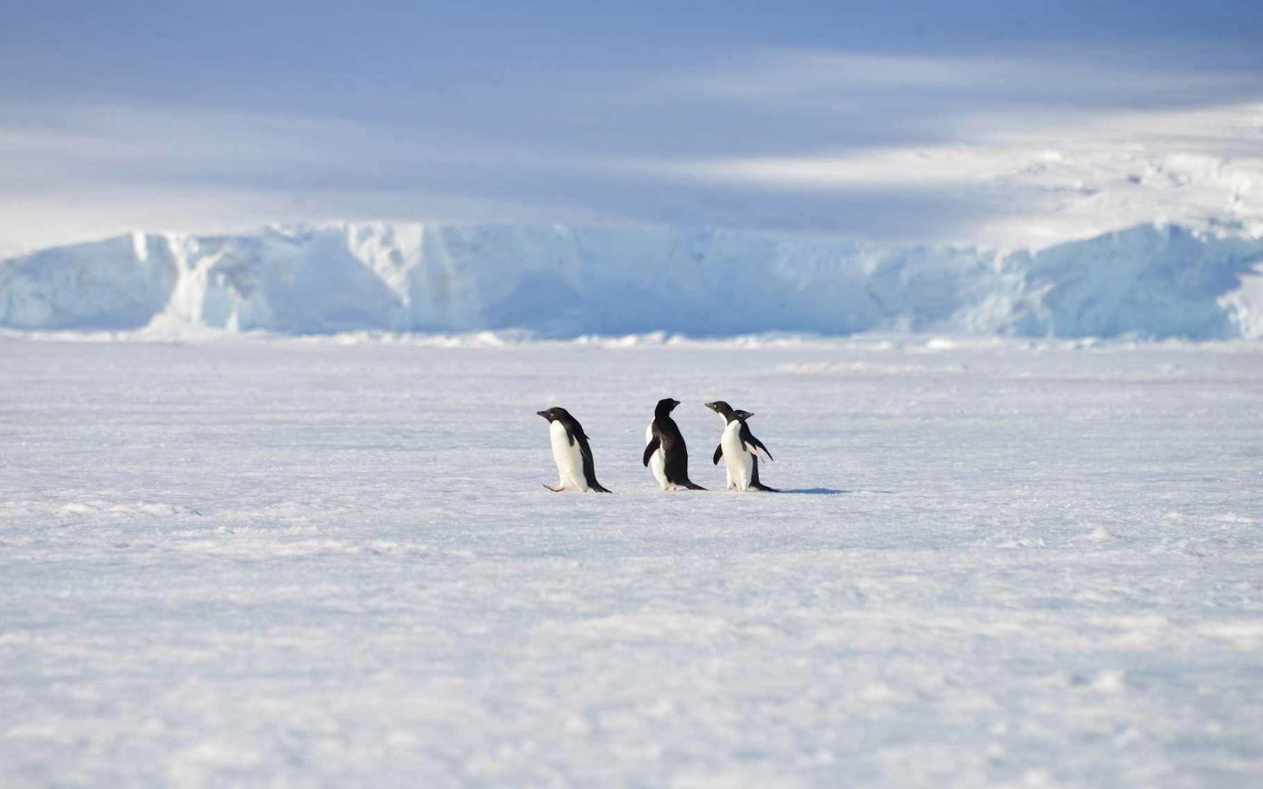 L'Antarctique cache encore des secrets. Une récente étude en fait la preuve. Elle montre qu'au cœur du continent, une mystérieuse source chaude fait fondre la glace. © vormenmedia, Fotolia