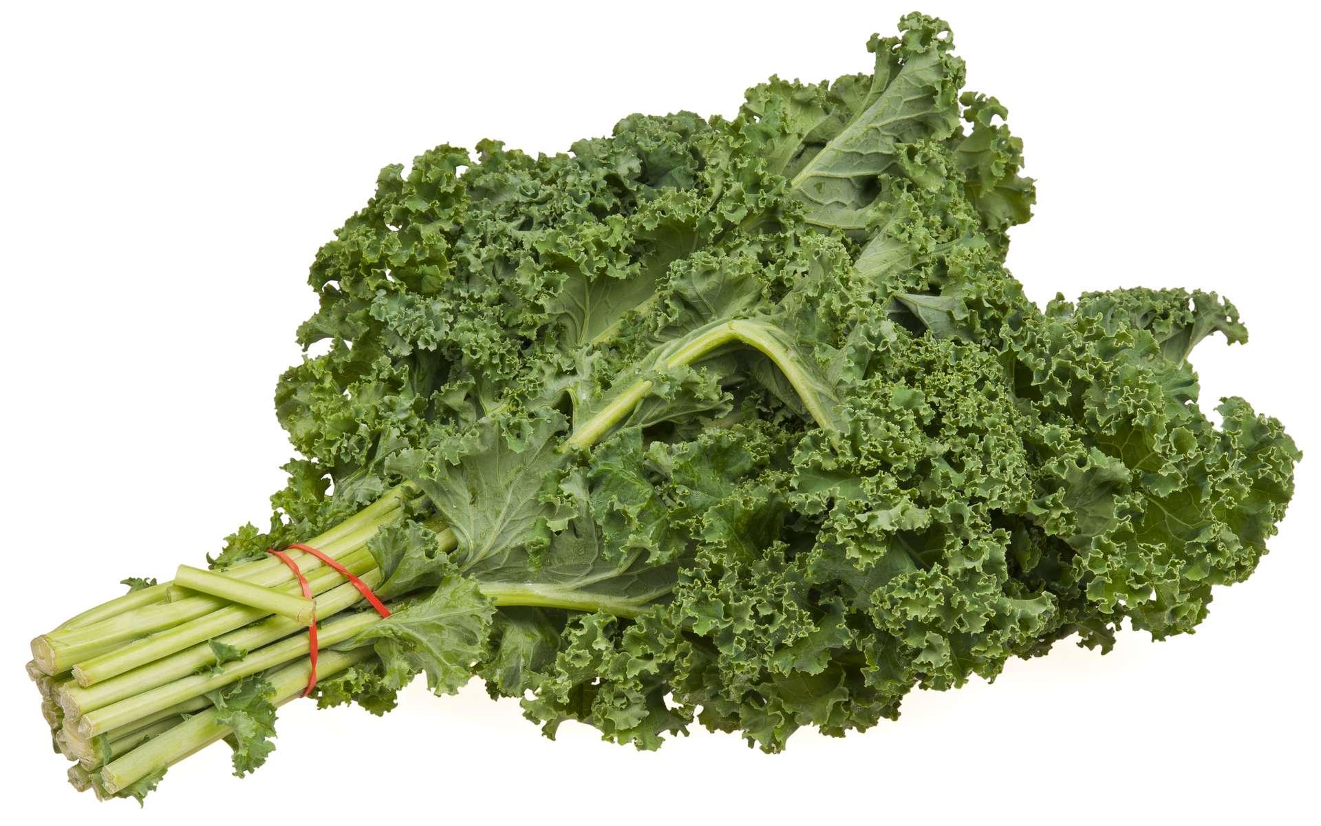 Le mot « kale » dériverait d'un ancien mot écossais. © Evan-Amos, Wikipédia, DP
