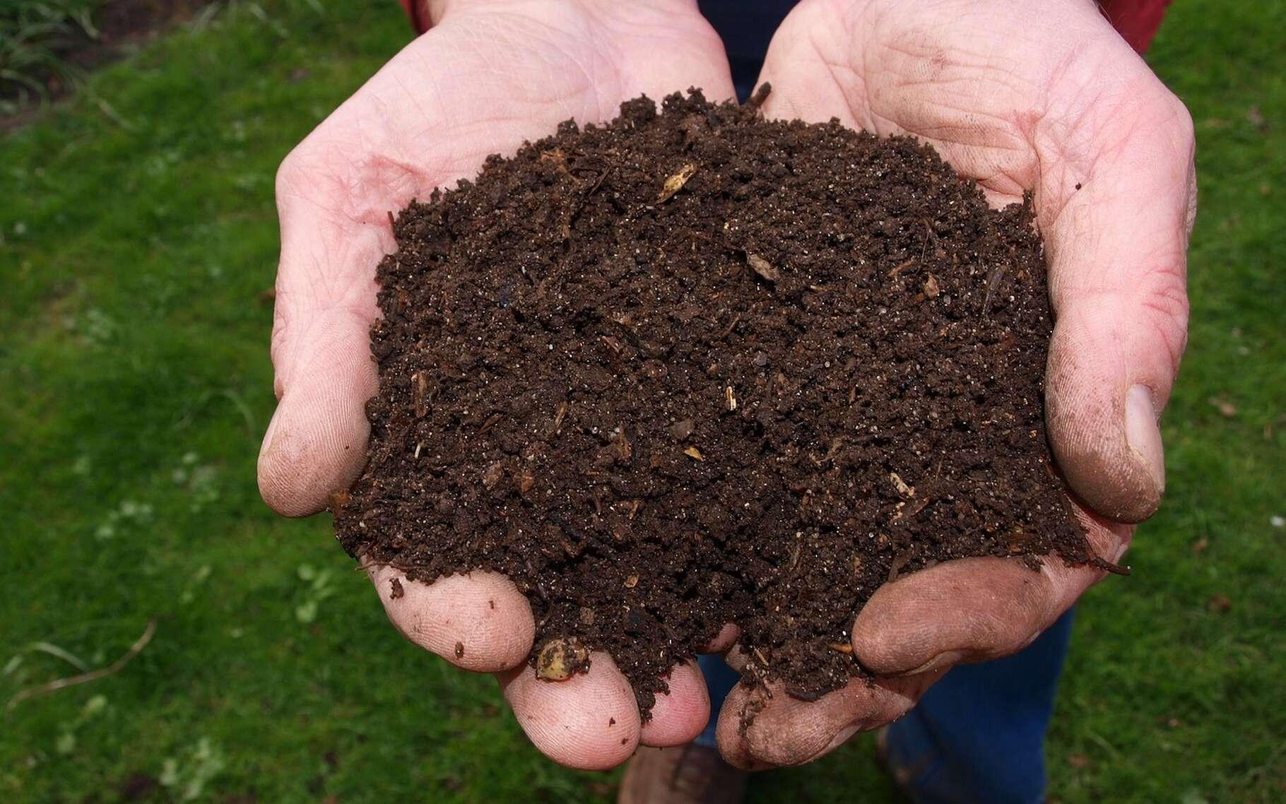 Le compost est issu de la fermentation de déchets organiques. Il ressemble à du terreau. © jokevanderleij8, Pixabay, CC0 Creative Commons