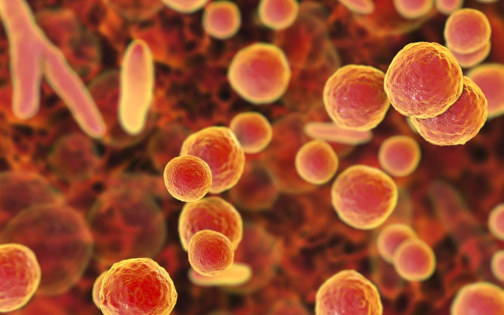 Les mycoplasmes sont de petites bactéries sans paroi. © Kateryna_Kon, Fotolia