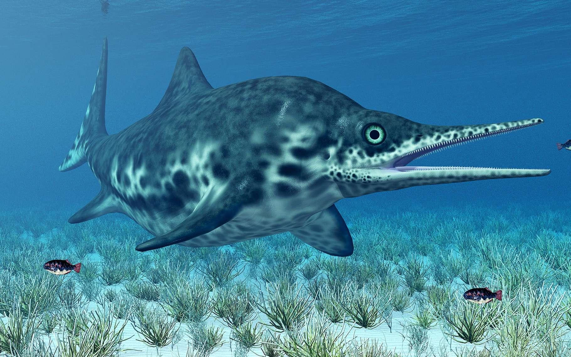 Les ichtyosaures sont apparus il y a 250 millions d'années, légèrement avant les dinosaures (230 millions d'années) et ont disparu peu avant eux. Ces vertébrés marins ressemblaient aux dauphins actuels. Comme eux, ils devaient venir respirer l'air à la surface des eaux. © Michael Rosskothen, Shutterstock