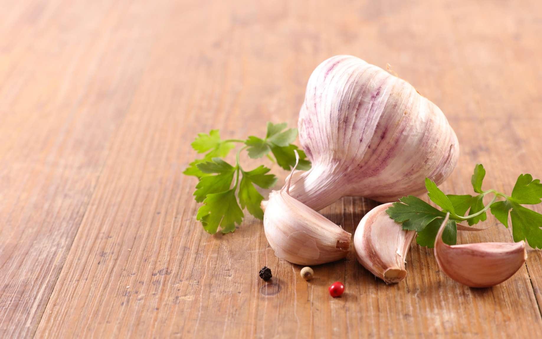 Les variétés d'ail les plus célèbres sont le blanc de la Drôme et du Vaucluse, le violet de Cadours et le rose de Lautrec. © Wikimedia Commons