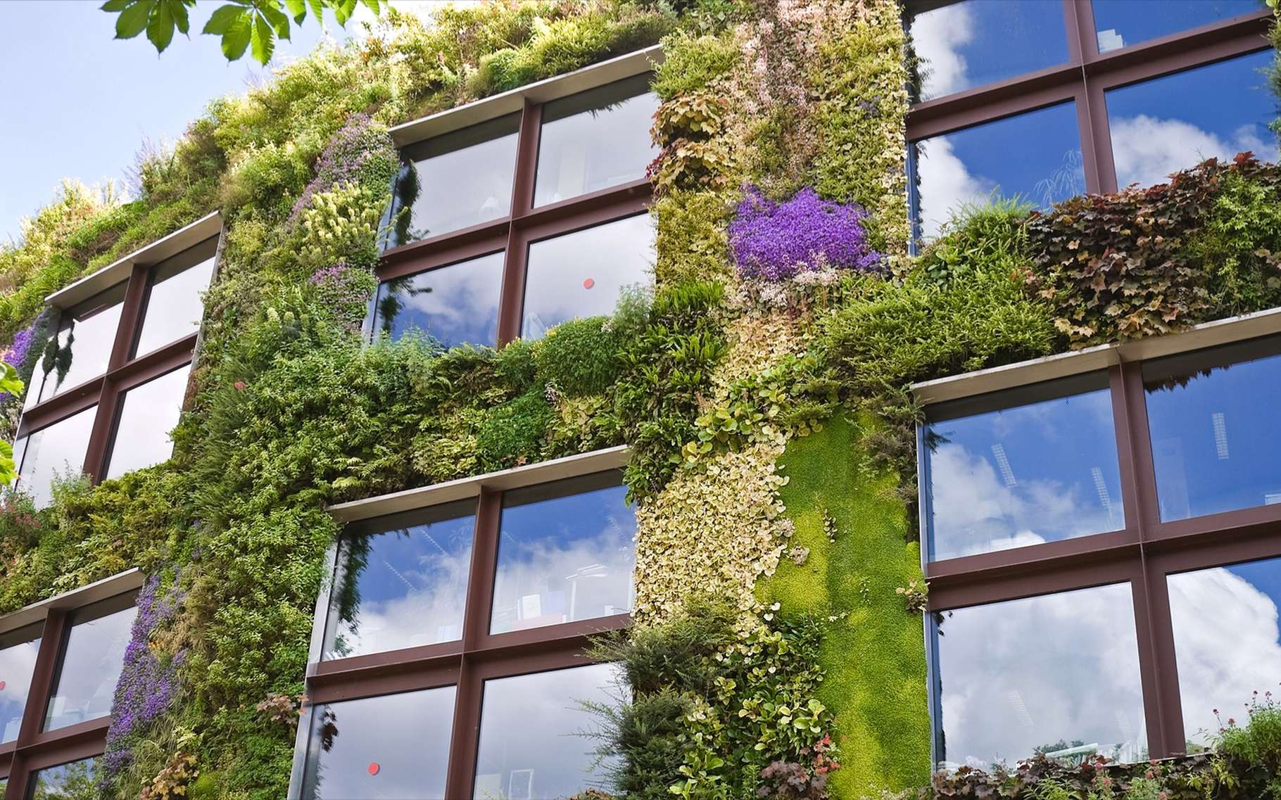 Un mur végétal extérieur n'est pas qu'esthétique, il favorise la biodiversité, limite la chaleur intérieure et absorbe du CO2. © Eugene Sergeev, Shutterstock