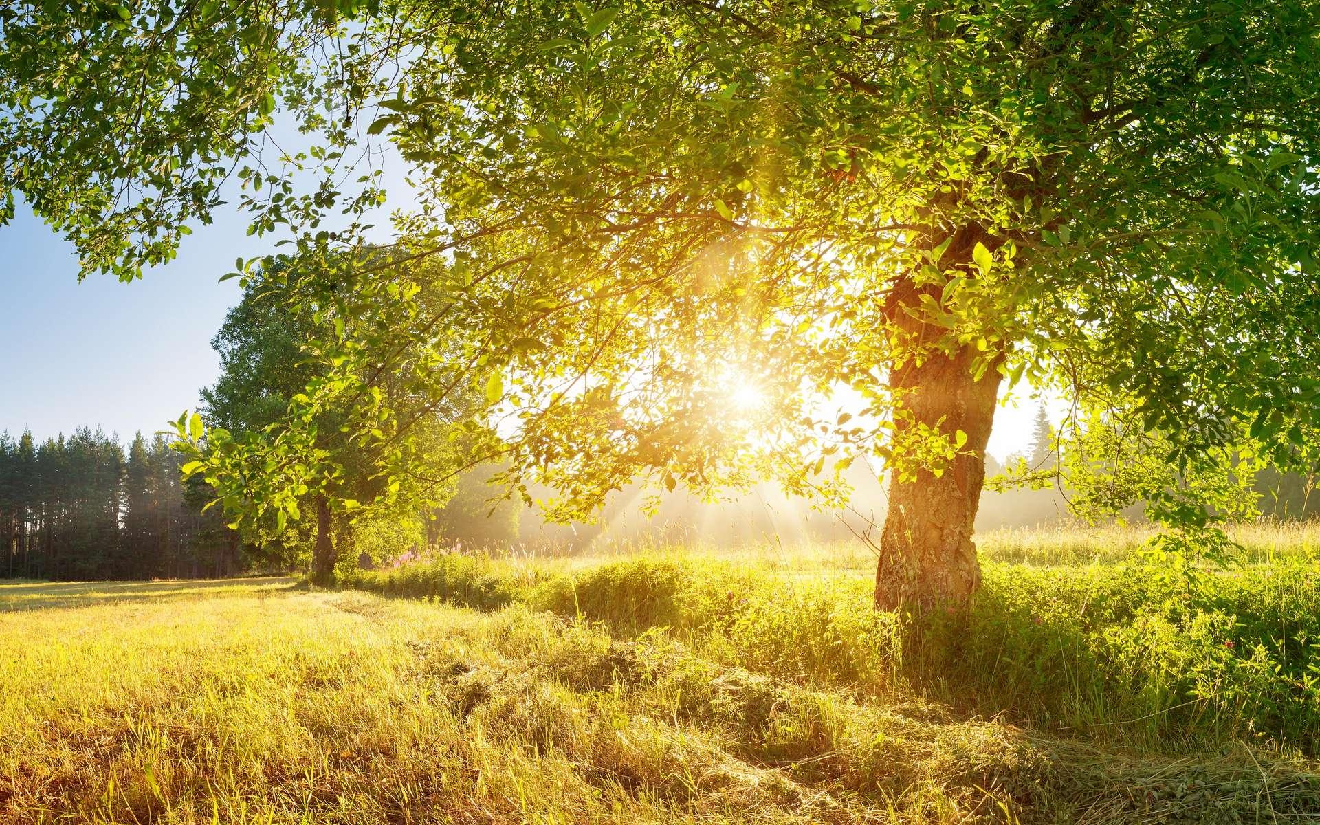 La France métropolitaine abrite 136 espèces d'arbres (chiffre du ministère de l'Agriculture, de l'Agroalimentaire et de la Forêt). © candy1812, Adobe Stock