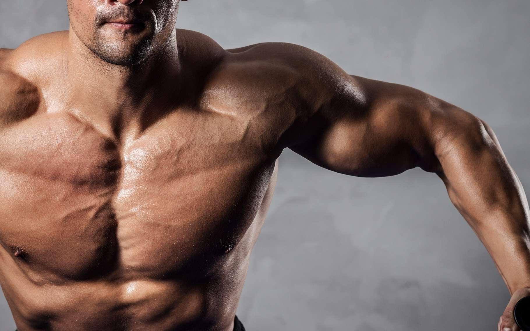 Certains sportifs prennent des compléments de créatine pour augmenter leur masse musculaire… et leurs performances. © Syda Productions, Shutterstock