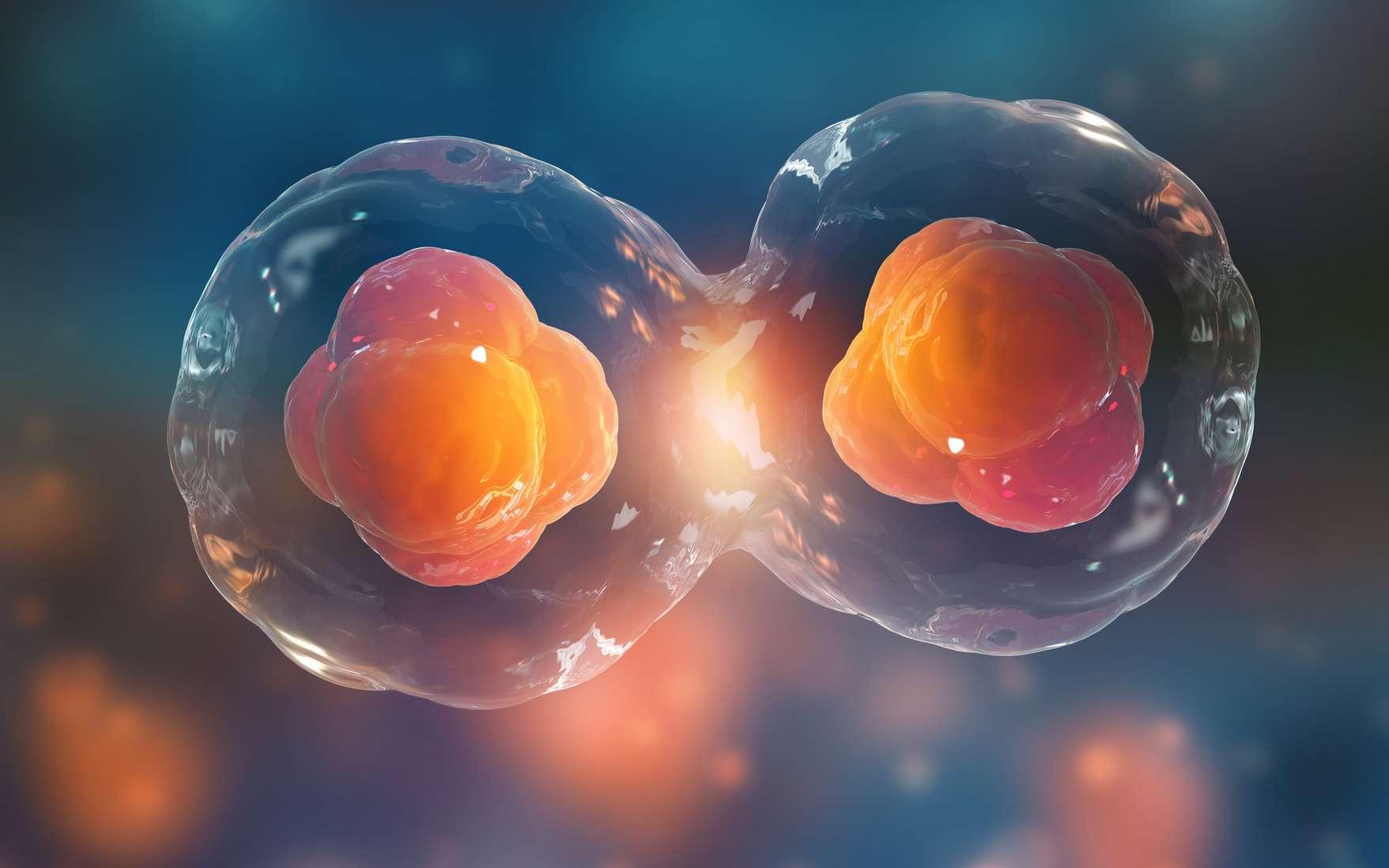Expériences, recherches, analyse des résultats. Le biochimiste tente de percer le mystère des cellules afin de faire progresser la recherche scientifique. © Siarhei, Fotolia.