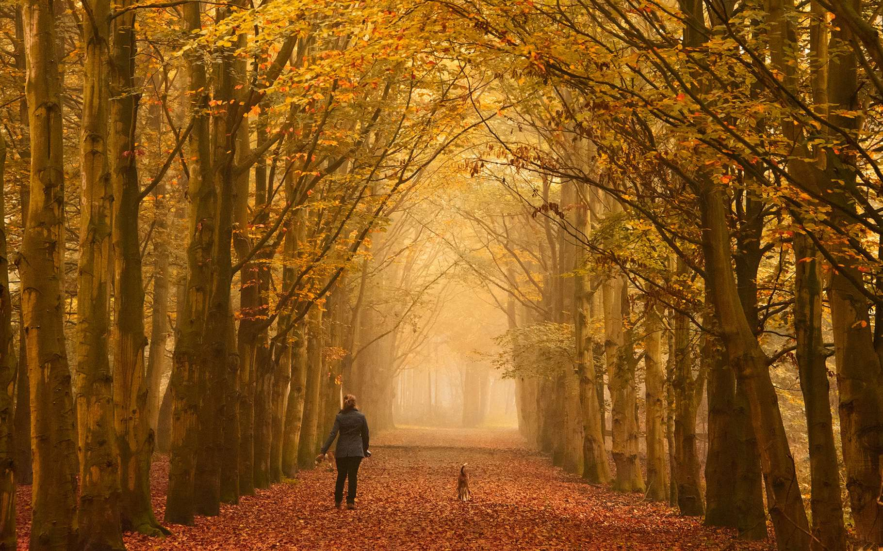 Pour les habitants de l'hémisphère Nord, l'équinoxe d'automne marque la fin de l'été et le début d'une nouvelle saison lors de laquelle les arbres perdent leurs feuilles. © iPics, Shutterstock