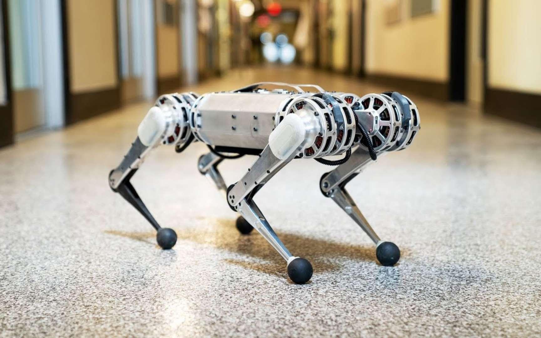 Le mini Cheetah mis au point par les chercheurs du Massachussets Institute of Technology (MIT, États-Unis) est le premier robot à quatre pattes à se montrer capable d'effectuer un backflip. Un salto arrière, si vous préférez. © MIT
