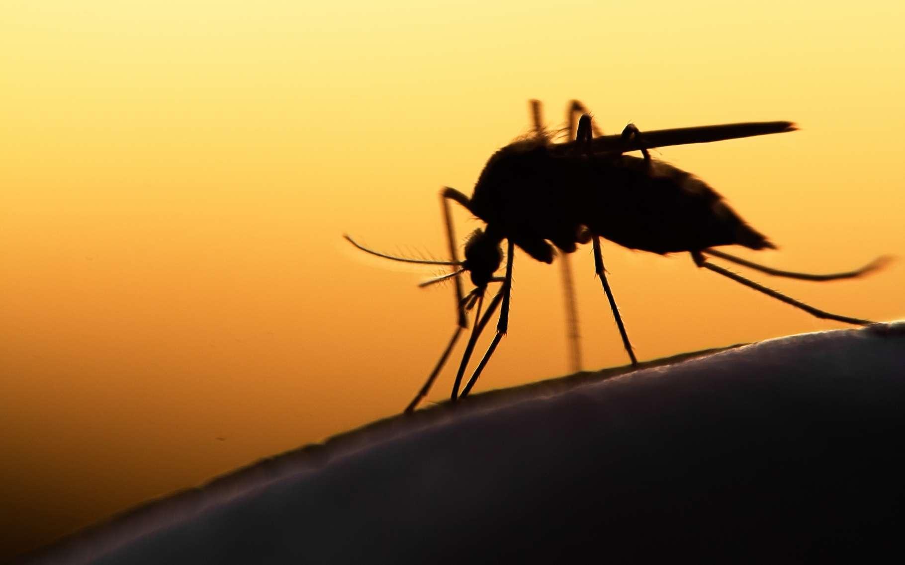 Le Brésil est l'un des pays les plus touchés par le virus Zika. Le concept de panneau publicitaire piège à moustique est une tentative inédite qui pourrait faire école. © Mycteria, Shutterstock