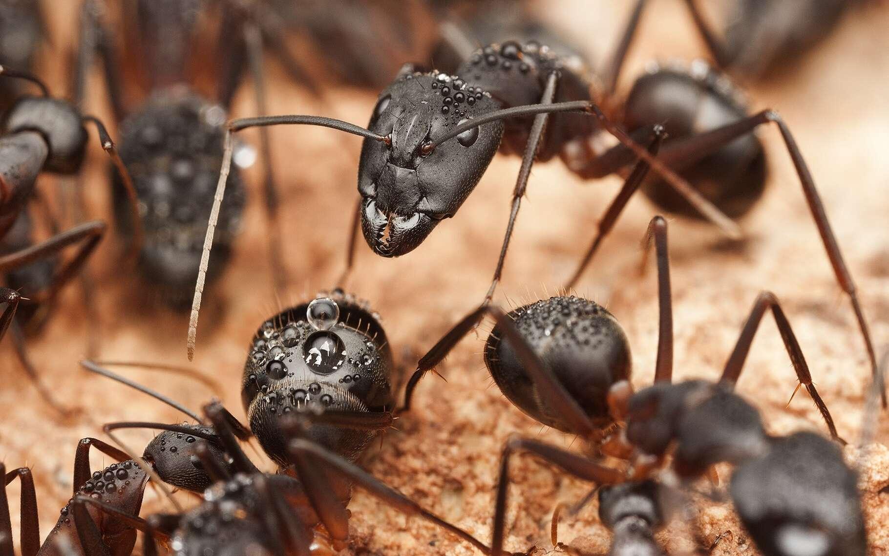 Dans la fourmilière, chaque fourmi joue un rôle précis. © Pavel Krasensky, Shutterstock