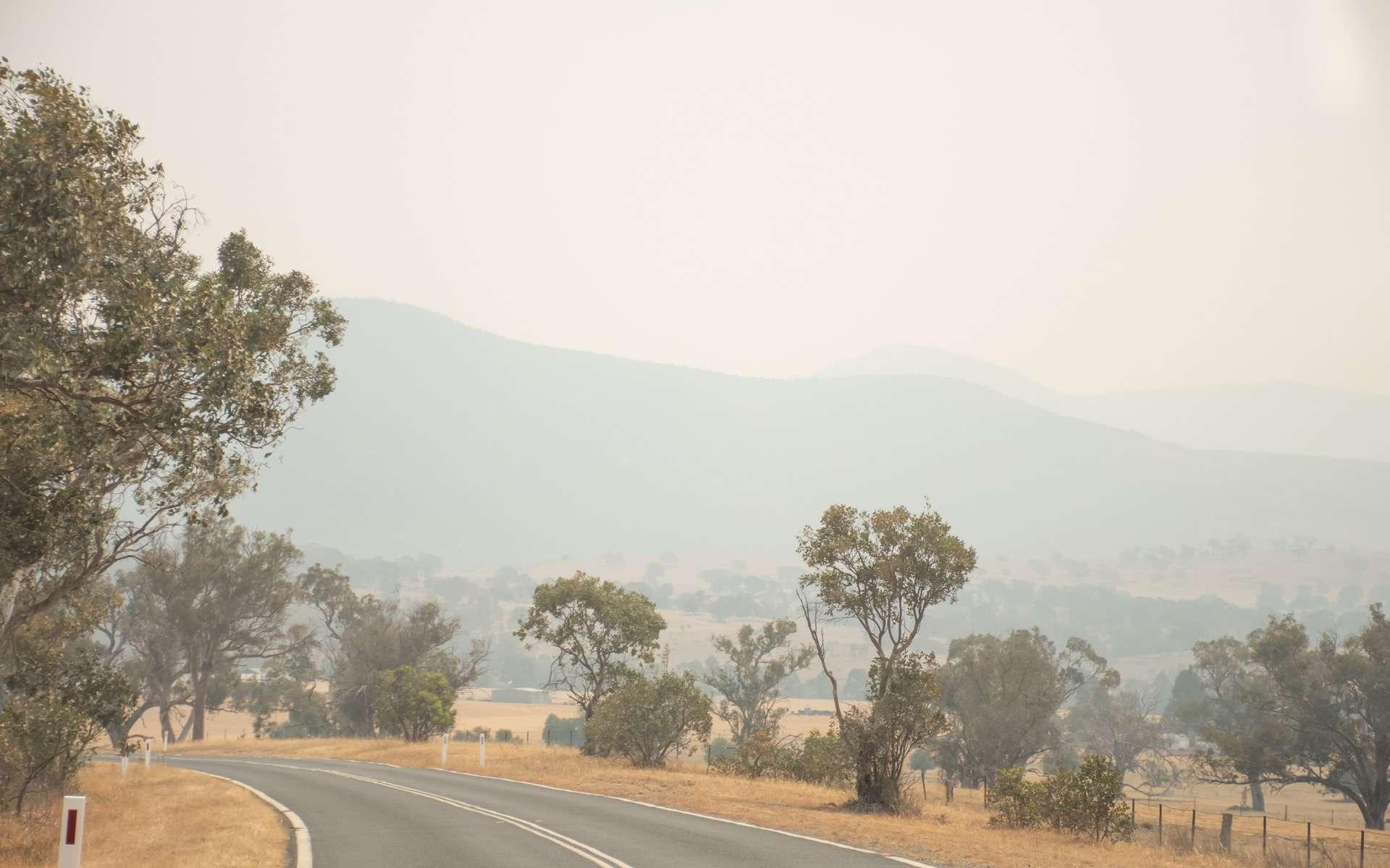 En Australie, la situation ne s'arrange pas. Une nouvelle vague de chaleur est attendue en fin de semaine et les feux de brousse devraient repartir de plus belle. © Daria Ni, Adobe Stock