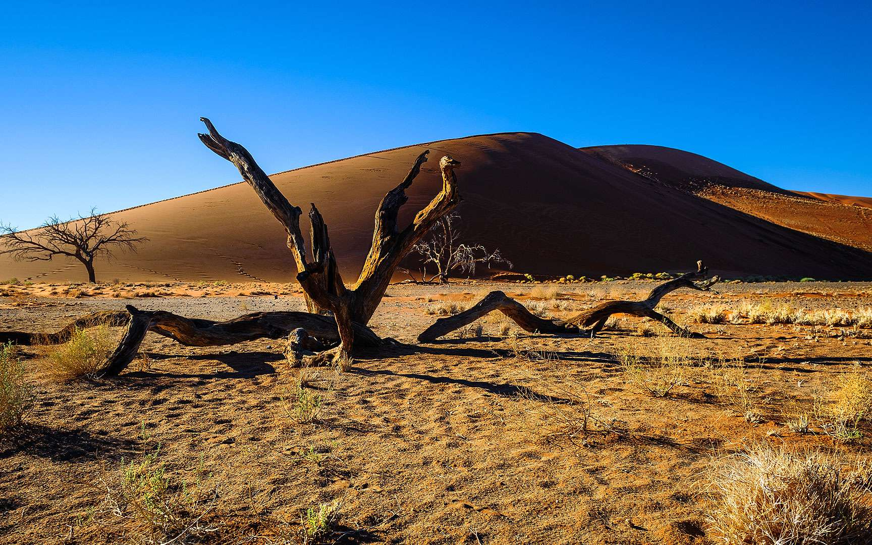 Sossusvlei est un désert de sel et d'argile. Il se trouve dans le parc de Namib Naukluft, dans le désert du Namib, en Namibie. Il consiste en un oued pénétrant depuis la localité de Sesriem sur une soixantaine de kilomètres d'est en ouest dans la zone des dunes du désert. Sossusvlei est le site touristique le plus visité de Namibie. © Jean-Louis Vandevivère, Flickr, CC by-nc-sa 2.0