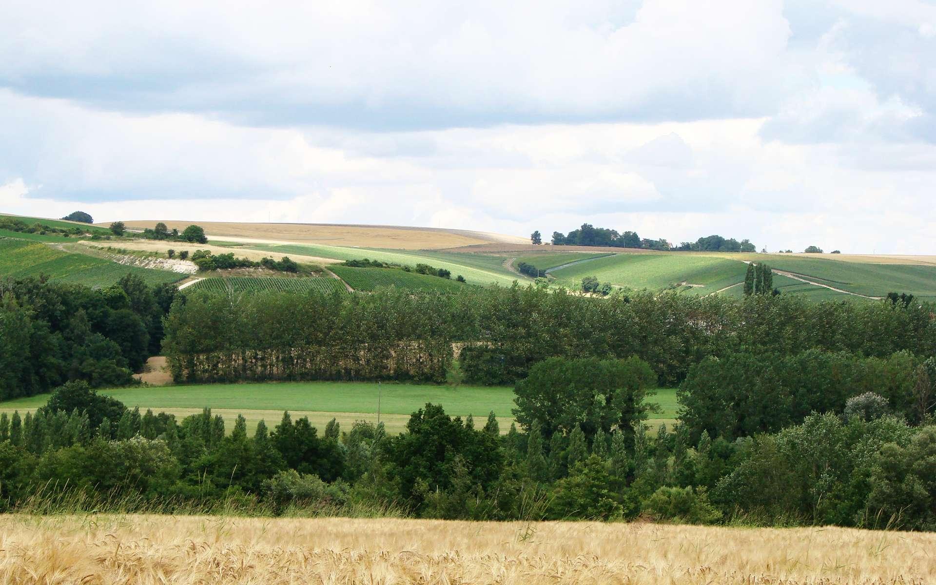 Parc naturel régional de la montagne de Reims, la vallée de l'Ardre près de Savigny-sur-Ardres. © Vassil, Wikimedia Commons, DP