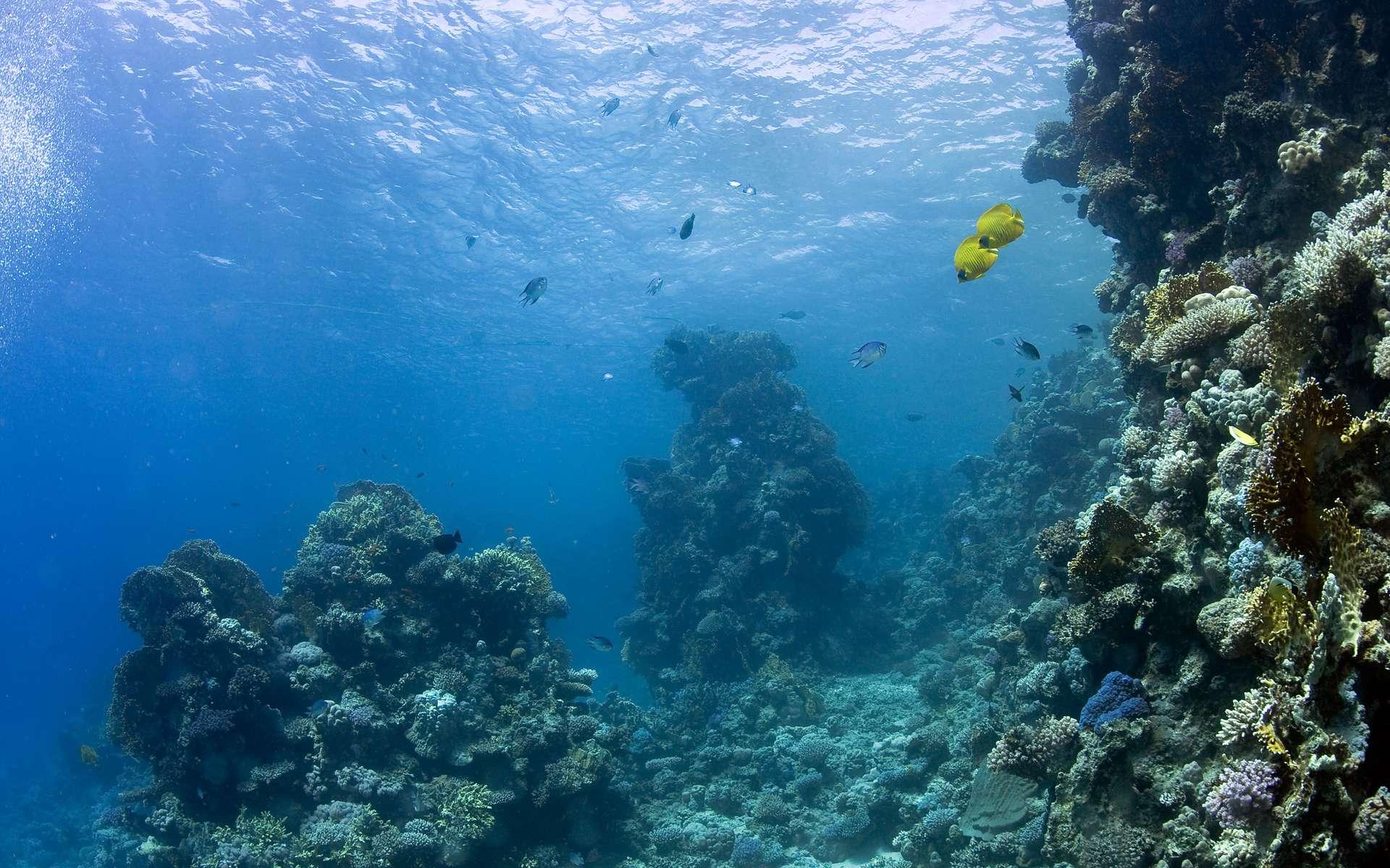 10% des récifs coralliens mondiaux vivent dans des eaux françaises. © DR