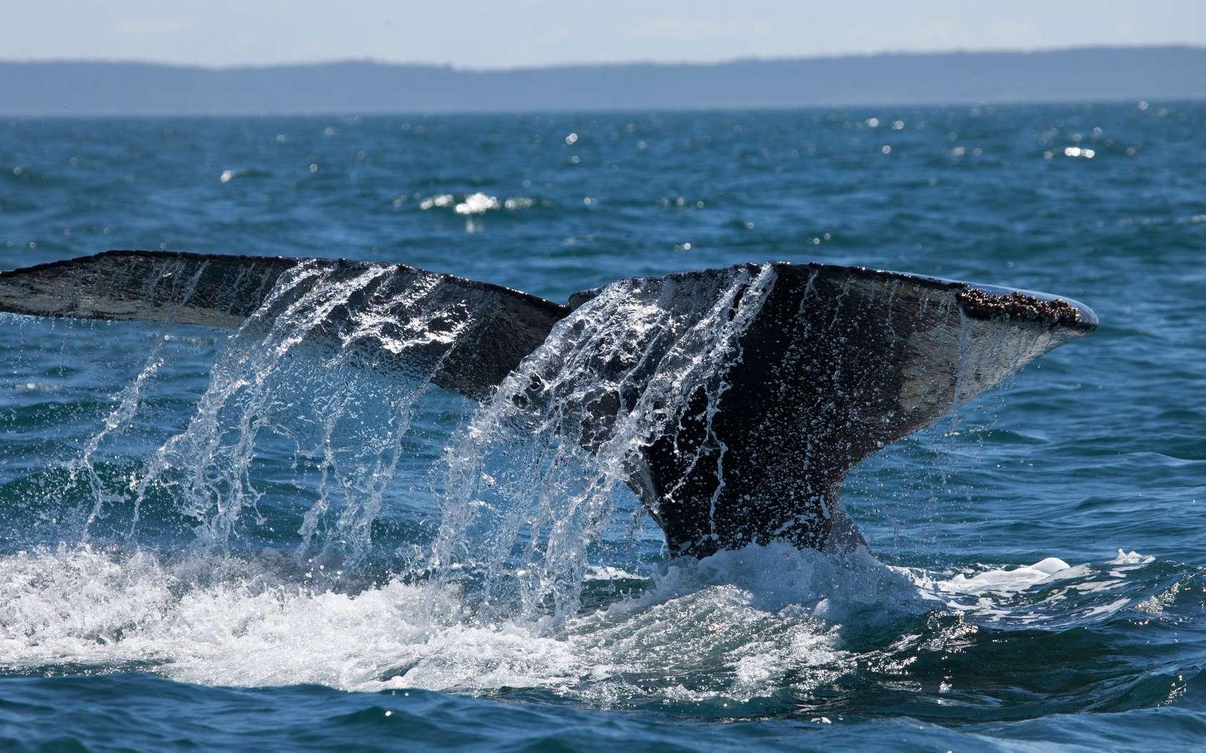 Quelles sont les plus grandes réserves marines du monde ? © DaiMar, fotolia