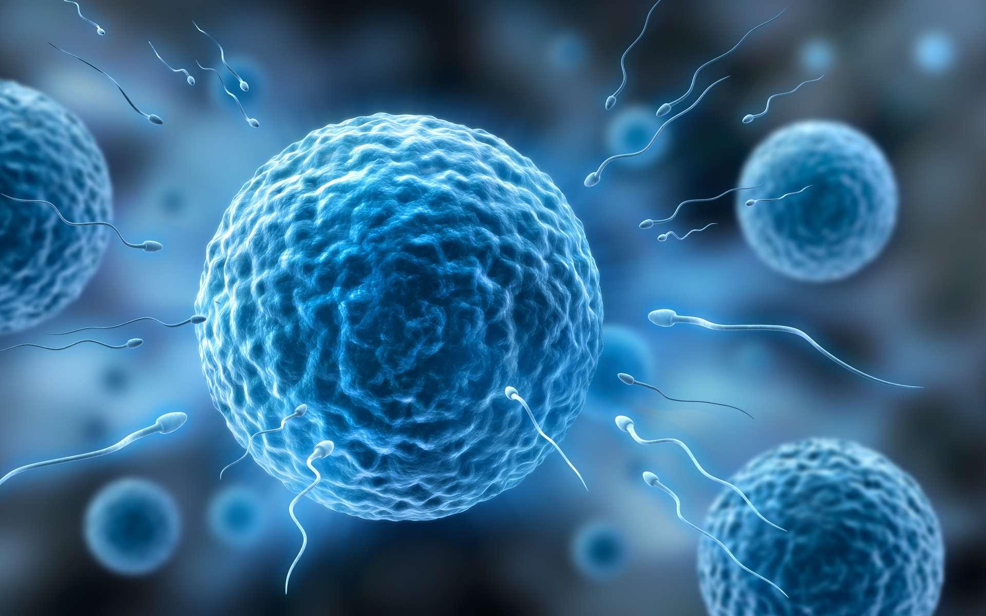 Illustration de spermatozoïdes nageant vers un ovule. © peterschreiber.media