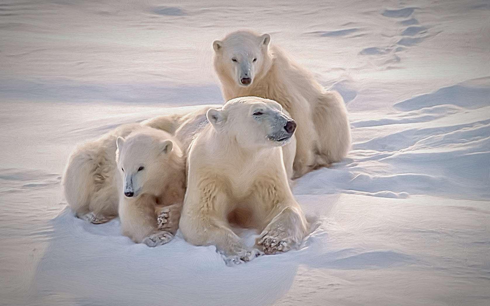 Une famille d'ours polaire. © outdoorsman, fotolia