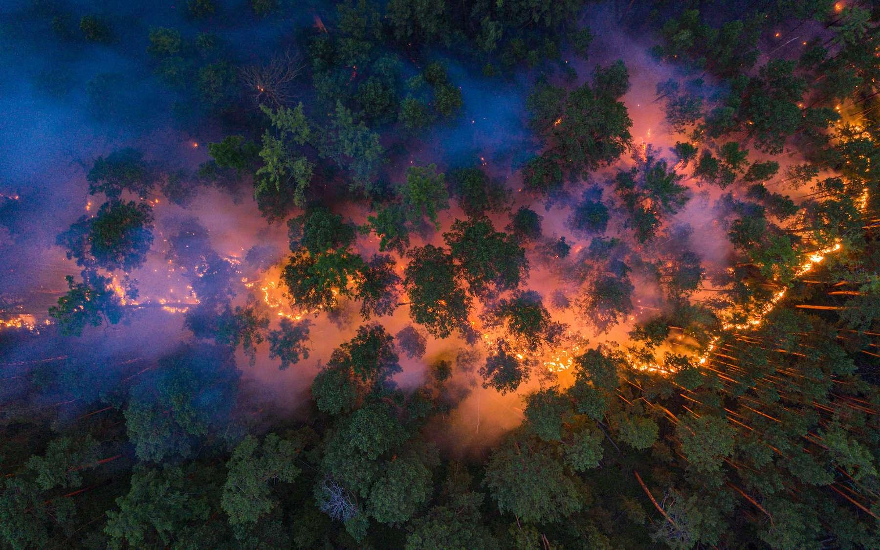 Près de 11 millions d'hectares de forêt ont été ravagé en Sibérie depuis le début de 2020. © Greenpeace