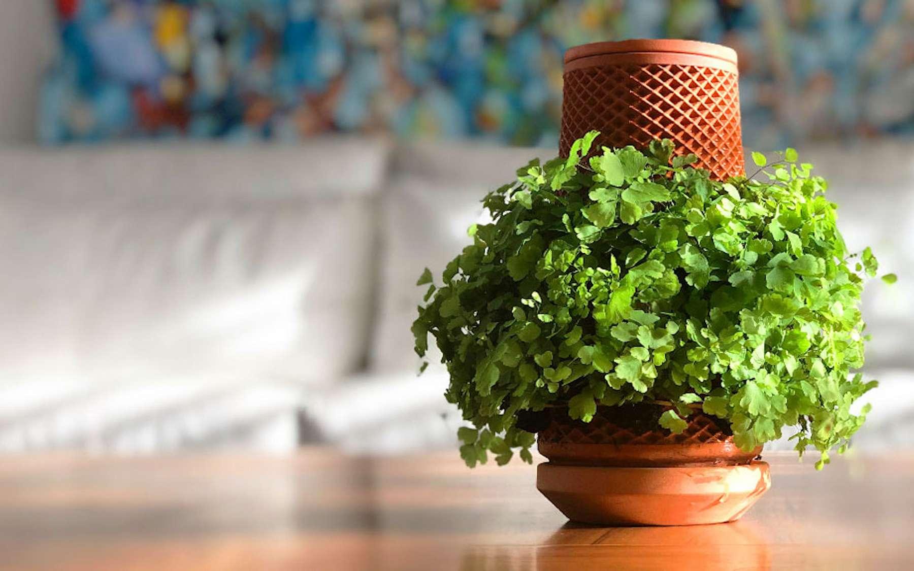 Le pot Terraplanter, fabriqué en structure micro poreuse, est adapté à la culture hydroponique de nombreuses plantes exotiques. © Terraplanter