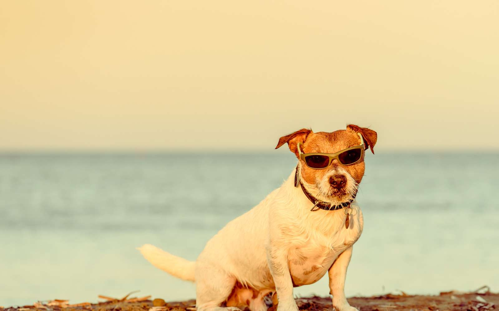 Des vacances réussies en compagnie de son chien ou son chat. © alexai_tm, Fotolia