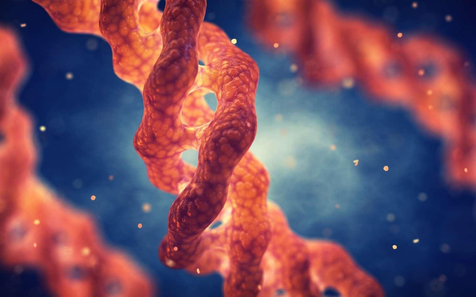 La molécule de collagène s'organise en une triple hélice. © nobeastsofierce, Fotolia