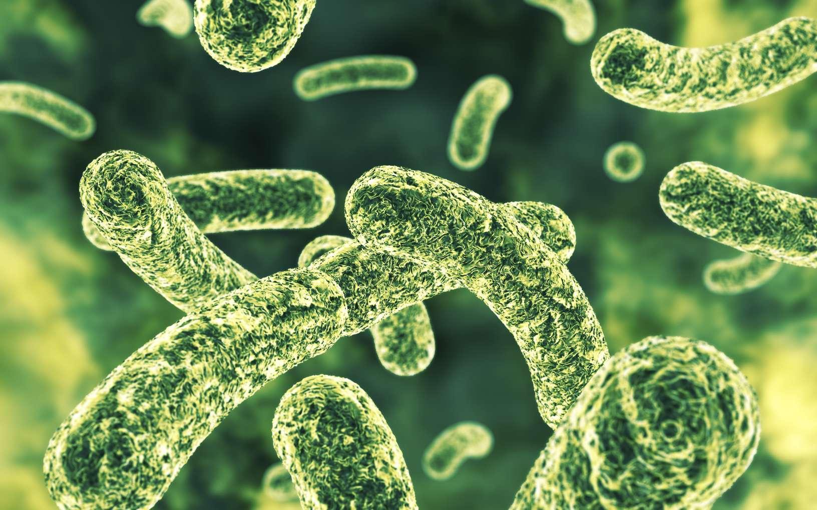 Baptisée « halicin », la molécule serait efficace contre de nombreuses bactéries. Elle a réussi à tuer de nombreuses bactéries résistantes aux antibiotiques existants. © Bjoern Meyer, Istock.com