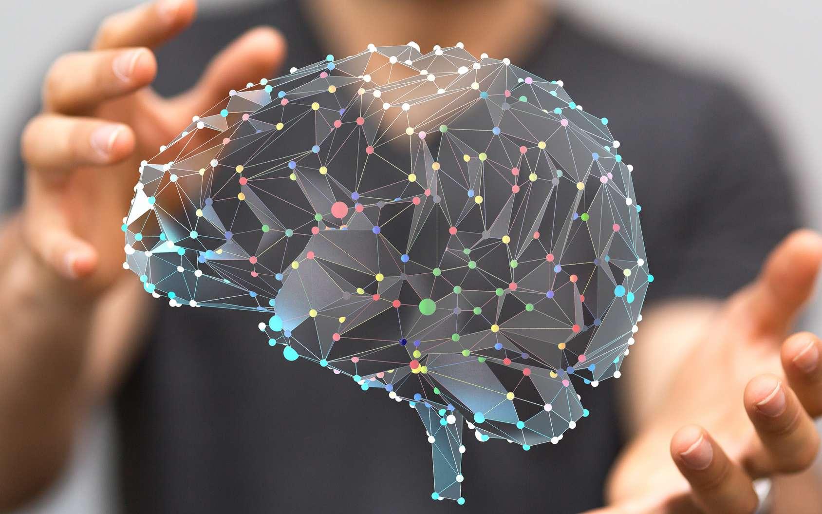 La Semaine du cerveau, c'est l'occasion de rencontrer des spécialistes des neurosciences qui étudient l'organe le plus complexe de notre corps. © vege, Fotolia