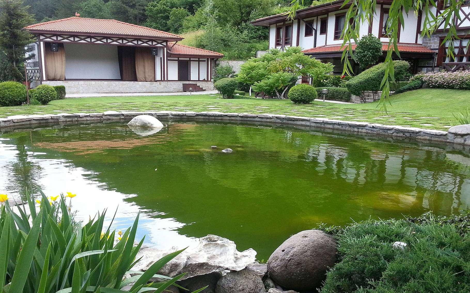 Bassin De Baignade Autoconstruction bassin de baignade et zone végétalisée : quelles proportions
