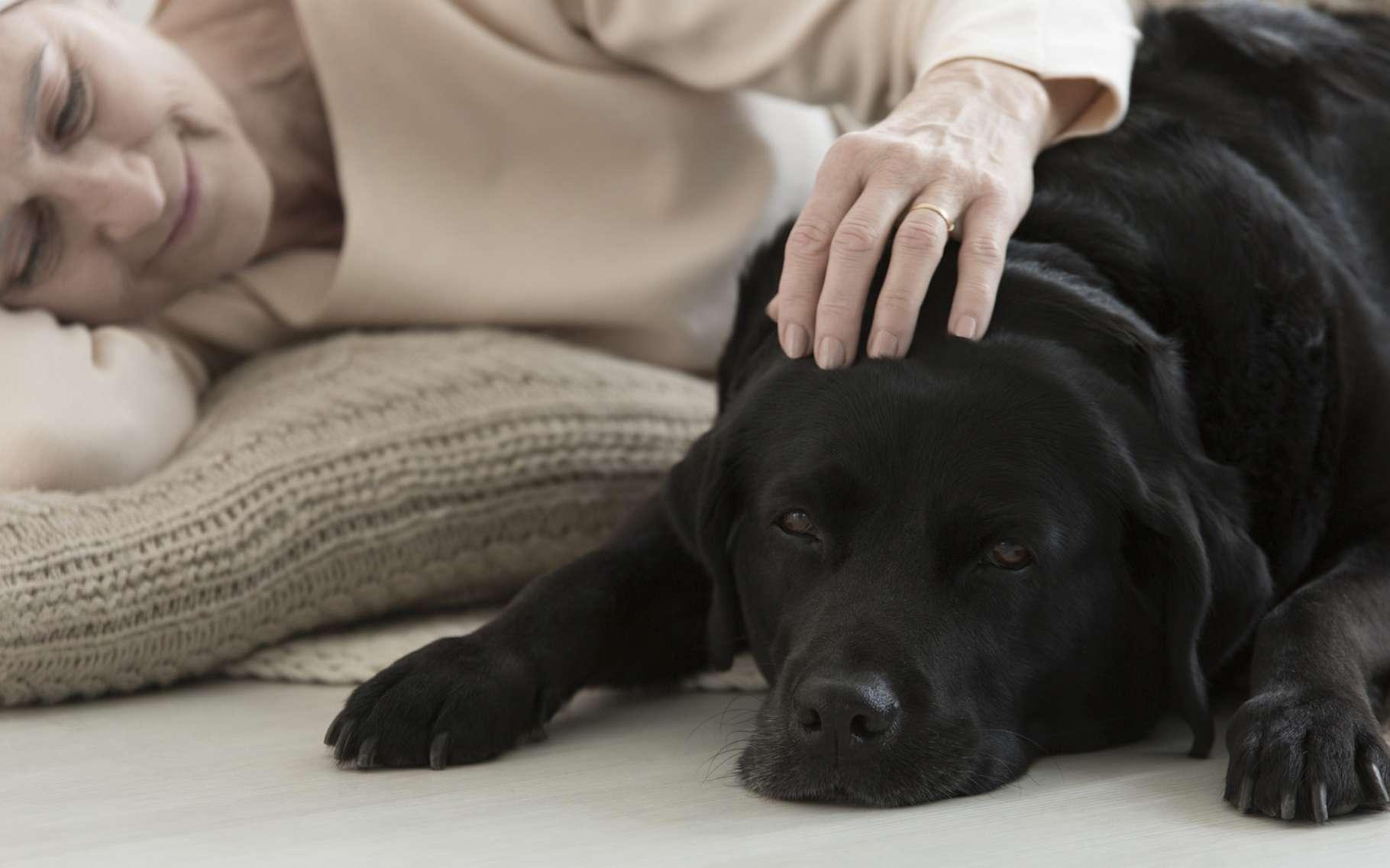 L'odorat des chiens est beaucoup plus développé que le nôtre. Selon des chercheurs américains, il pourrait même nous aider à mettre au point une méthode de dépistage des cancers, précoce et non invasive. © Photographee.eu, Fotolia