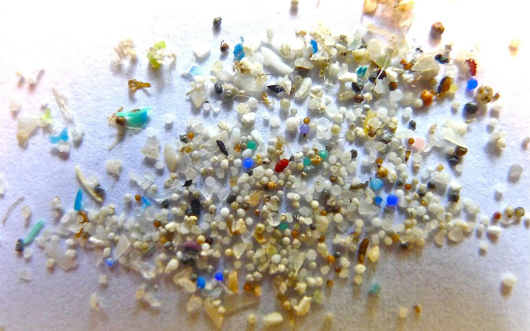 Les microsplastiques représentent un enjeu environnemental majeur. © Oregon State University, Flickr, CC BY-SA 2.0