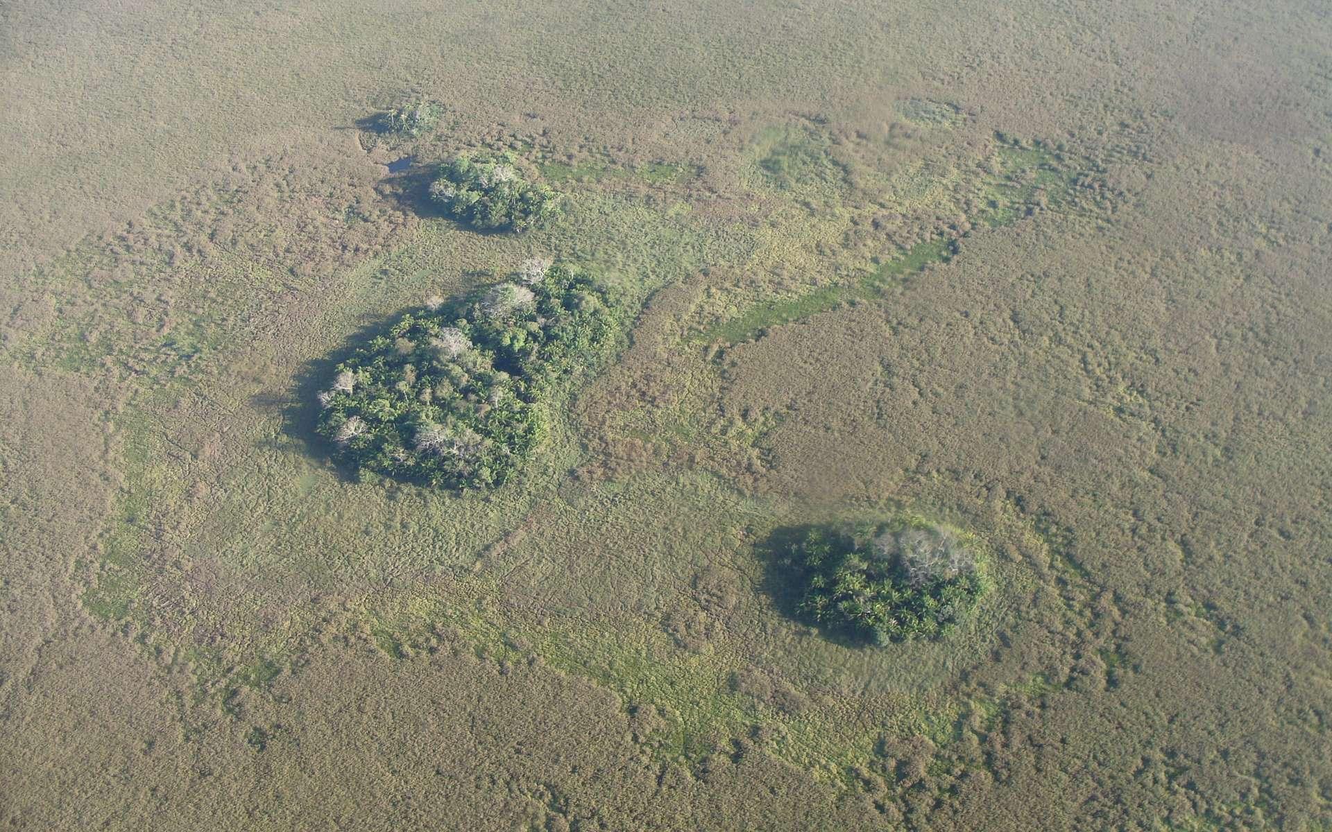 Ces îlots forestiers constituent des zones de culture il y a 10.000 ans. © Umberto Lombardo