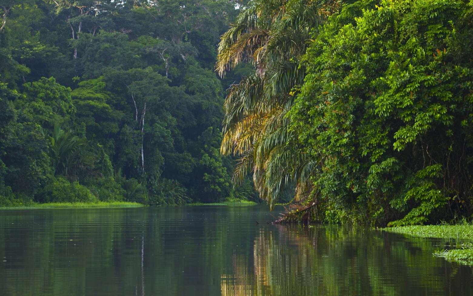 30 % des espèces d'arbres sont menacées d'extinction dans le monde