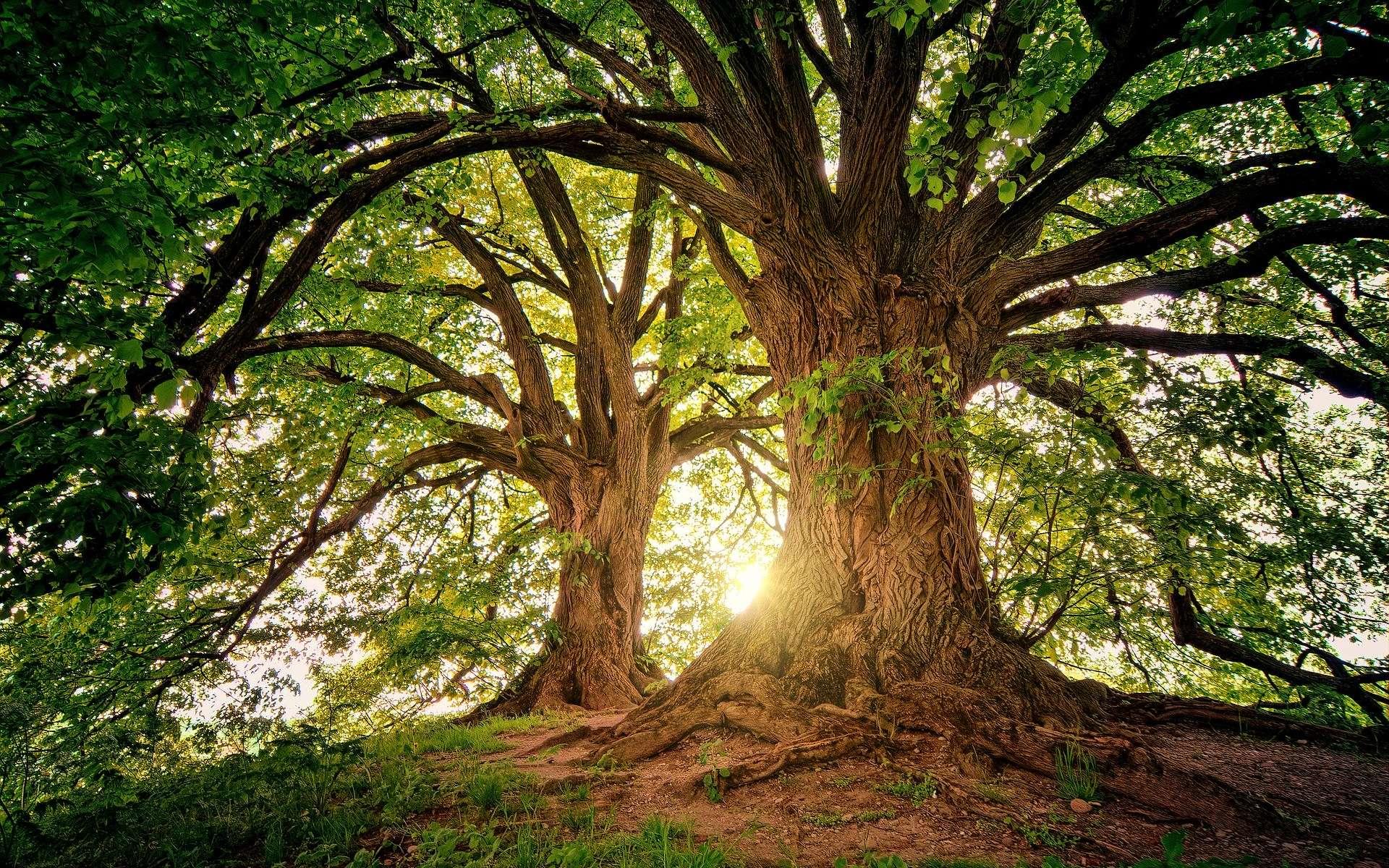 Le projet de Francis Hallé : faire renaître en Europe de l'Ouest une forêt primaire. © Jplenio, Pïxabay, DP