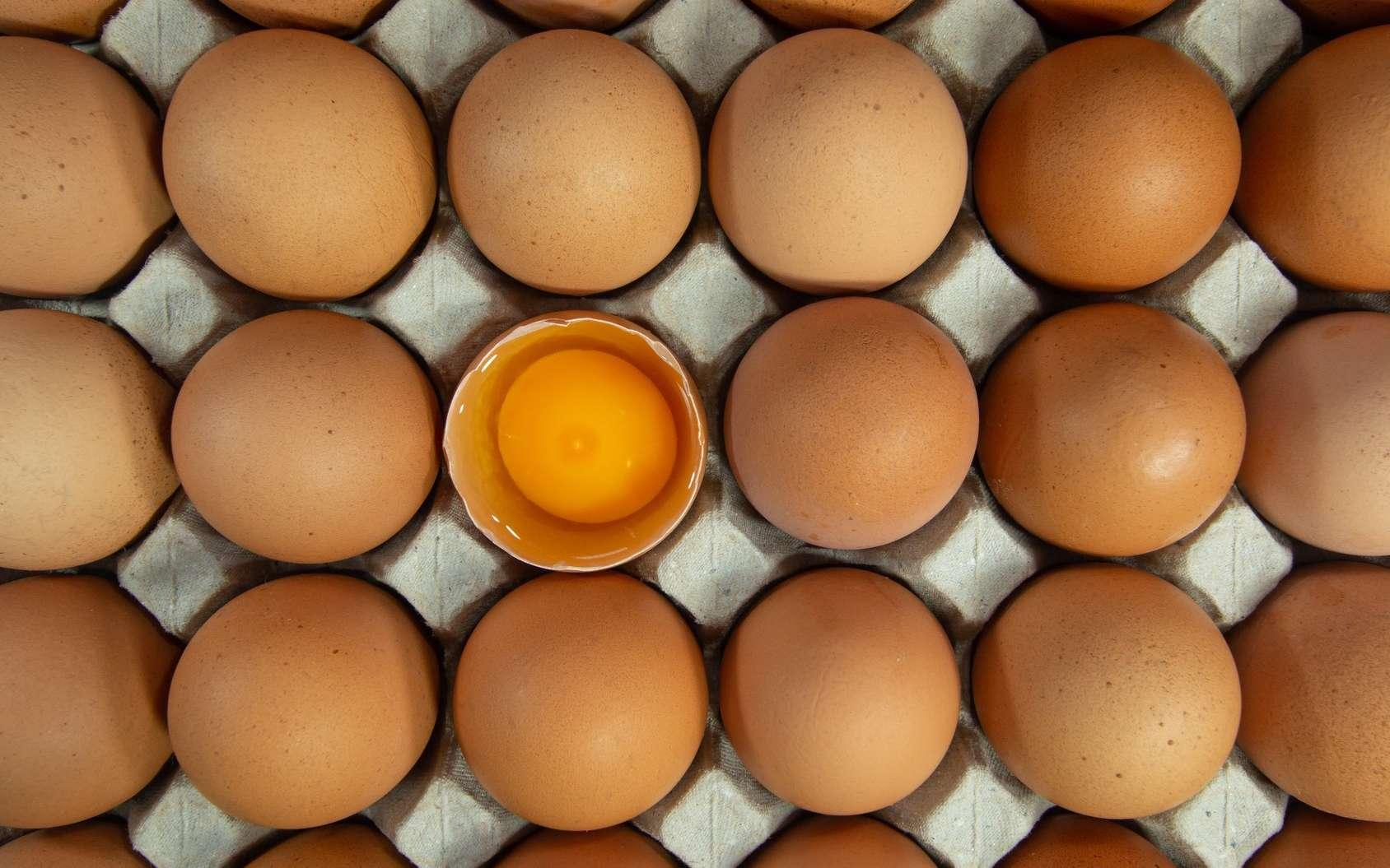 L'albumen désigne le blanc de l'œuf. © Rattanachai, Fotolia