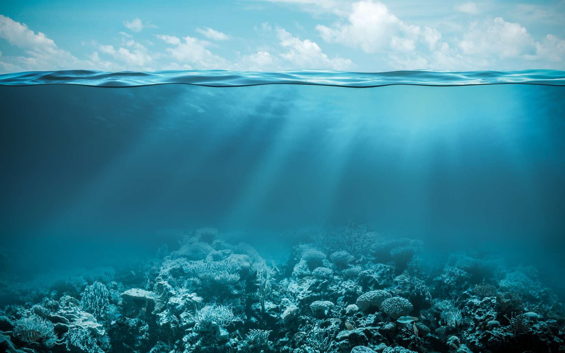 Un poulpe géant a été filmé en train de dévorer une méduse. Dans les océans, malgré les moyens actuels, les écosystèmes sont encore très mal connus. © Andrey Kuzmin, Fotolia