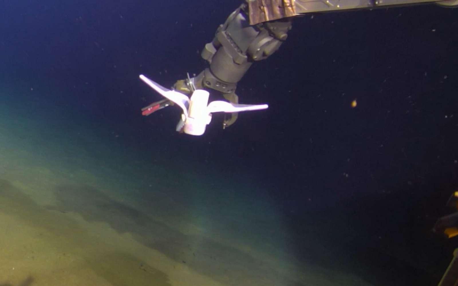 Le robot mou nage de manière autonome à plus de trois kilomètres de profondeur dans la fosse des Mariannes. © Nature