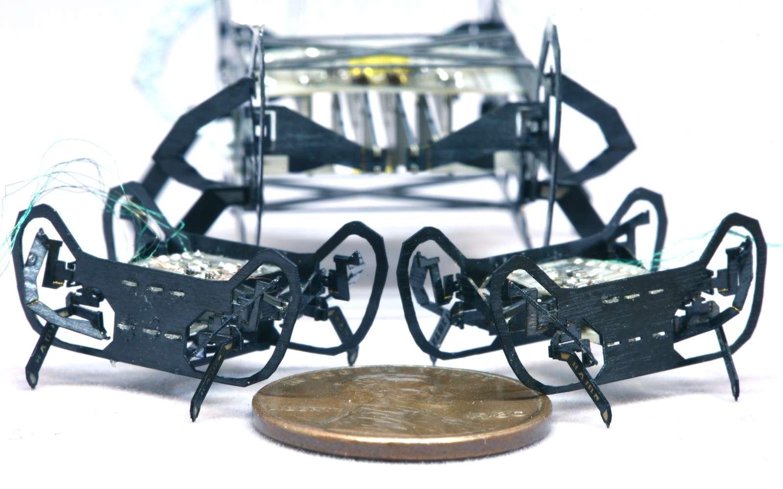 HAMR-Jr est un microrobot créé par des chercheurs de l'université de Harvard, capable d'avancer à 14 fois la longueur de son corps par seconde © Harvard
