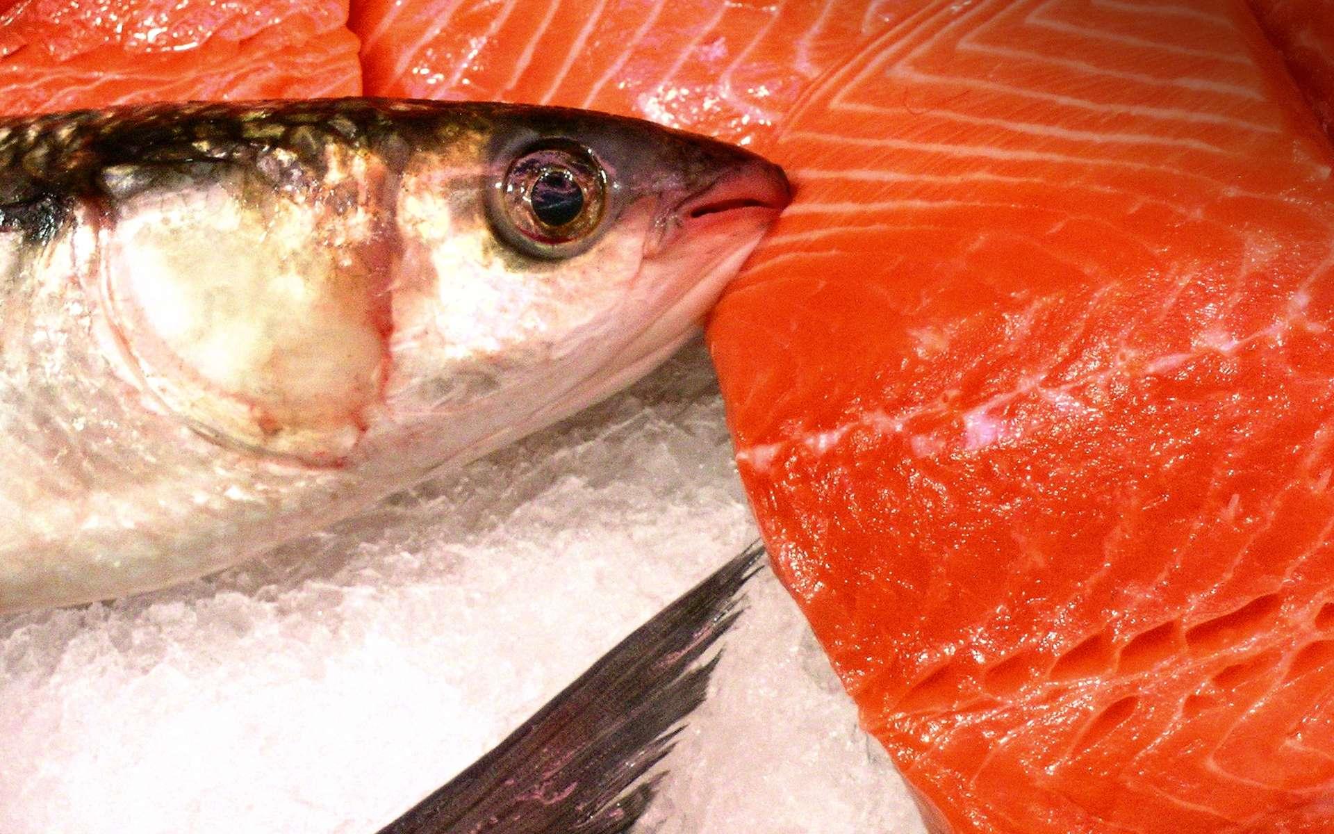 Le saumon est un des poissons les plus riches en oméga-3. © Jacques PALUT, Fotolia