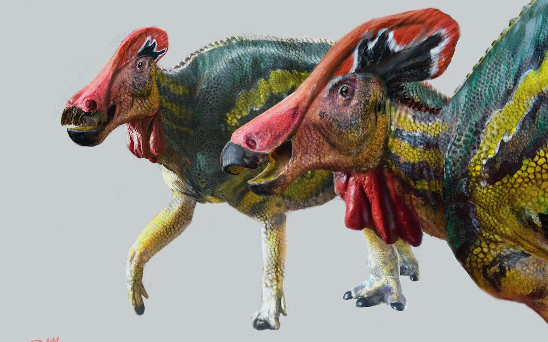 Des chercheurs de l'Institut national d'anthropologie et d'histoire et de l'Université nationale autonome du Mexique ont découvert un nouveau dinosaure à crête. Selon eux, un dinosaure qui a dû être particulièrement bavard. © Luis V. Rey, Institut national d'anthropologie et d'histoire du Mexique