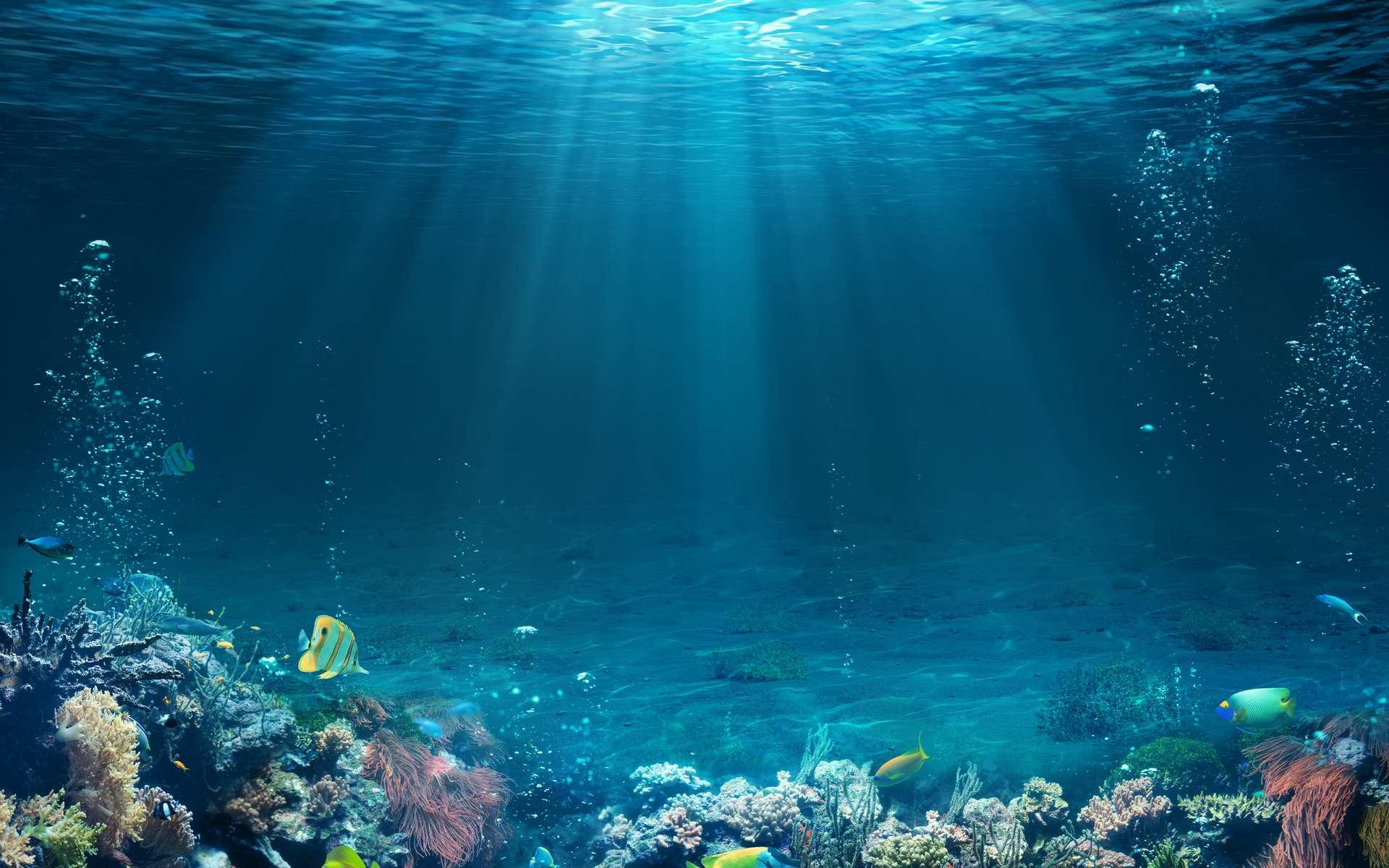 L'océan souffre. Les scientifiques se disent interloqués par l'ampleur, l'intensité et la rapidité du changement. © Romolo Tavani, Fotolia