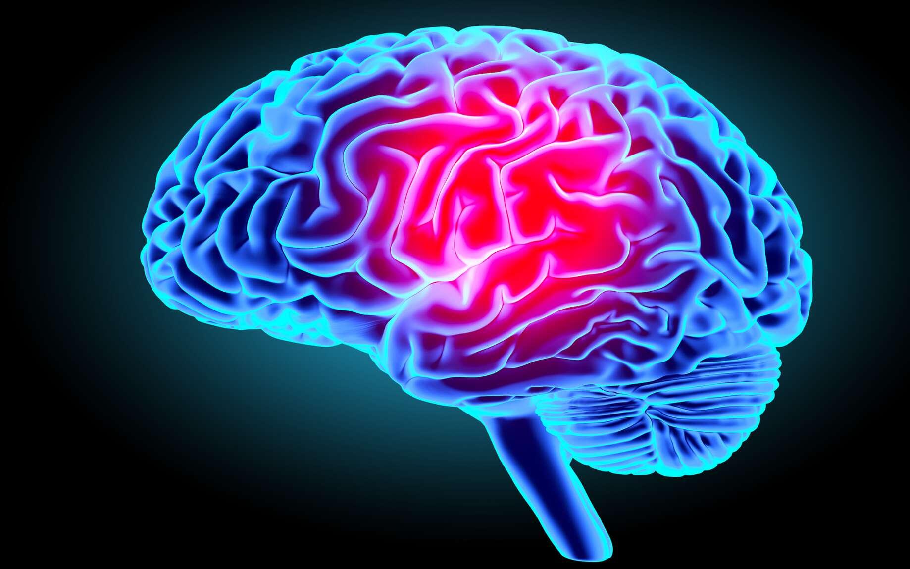 Le cerveau est l'organe du système nerveux central qui régule toutes les fonctions vitales. © gorbovoi81, Fotolia