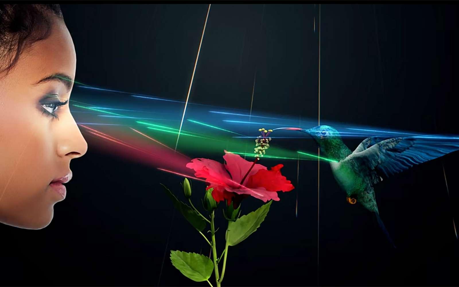 Créer de véritables hologrammes est très compliqué et jusqu'à maintenant, il ne s'agissait que d'illusions d'optiques. Light Field Lab vient changer la donne. © Light Field Lab
