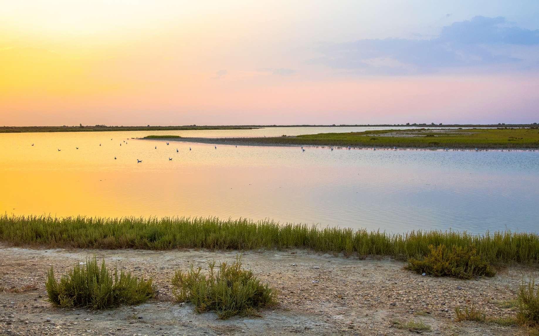 Tara va parcourir les deltas et fleuves européens. Ici, la Camargue. © creativenature.nl