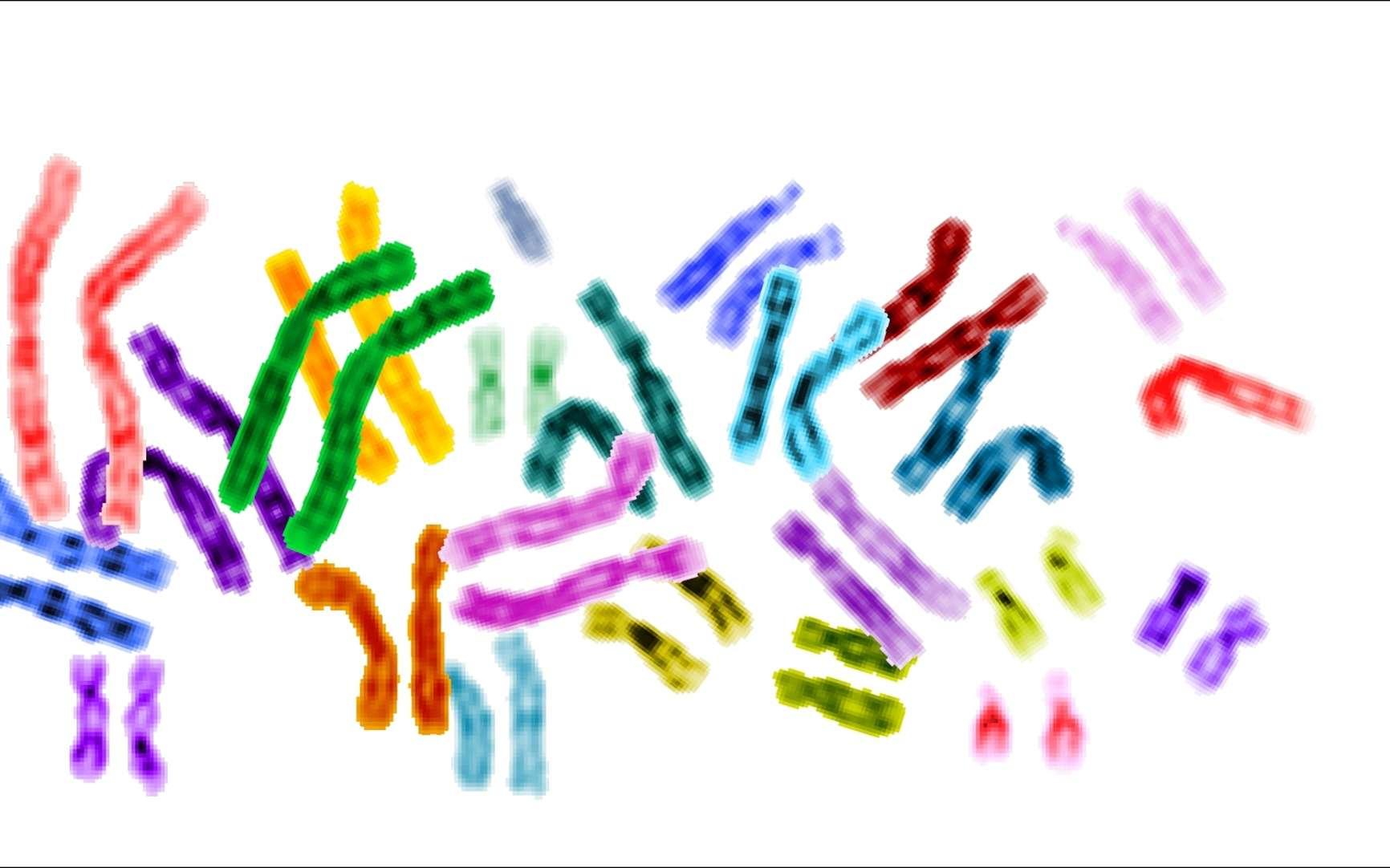 Normalement, nous sommes tous équipés de chromosomes regroupés en paires. Mais les trisomiques disposent d'un trio de chromosomes 21, ce qui entraîne un certain nombre de symptômes, que les scientifiques pensent prochainement pouvoir limiter. © NIH, Wikipédia, DP